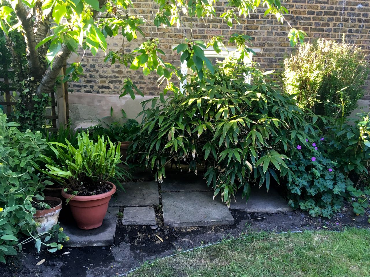 A new courtyard-like area under the cherry tree