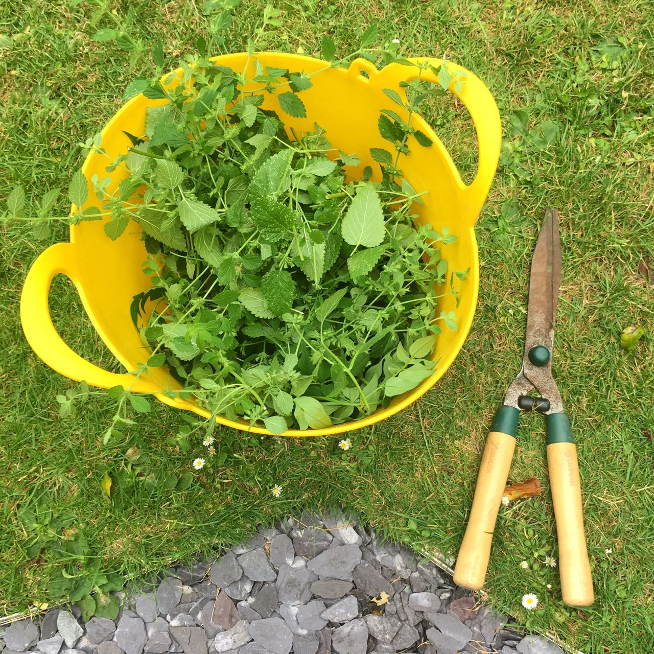 The lemon balm was for the chop