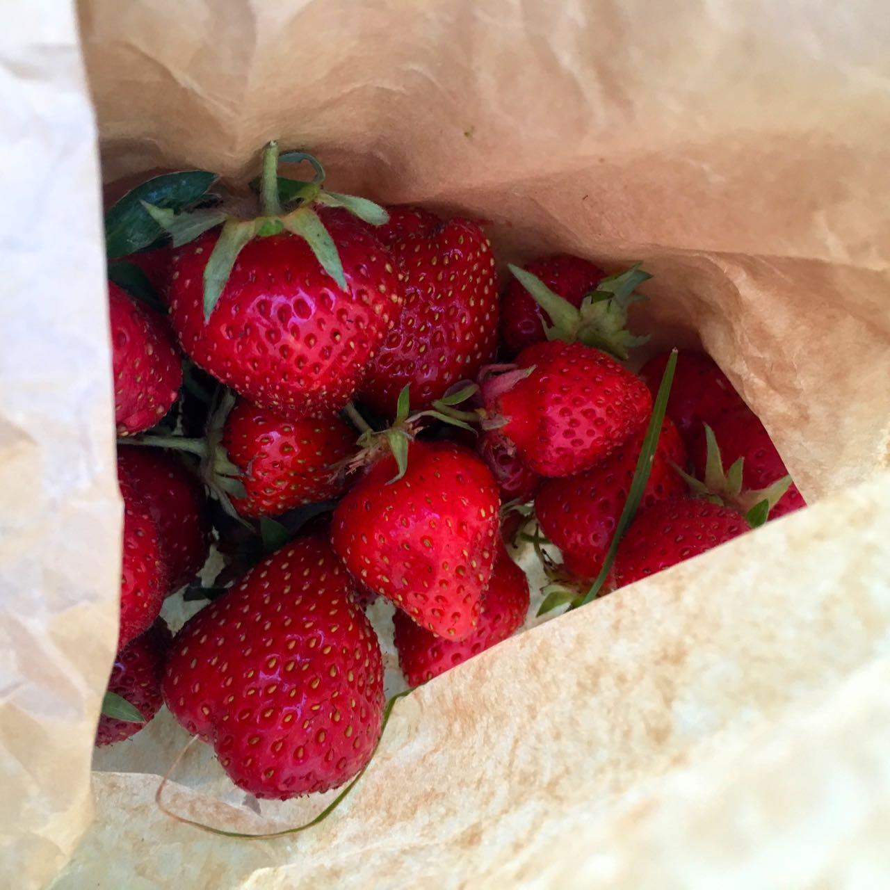 strawberries have been plentiful