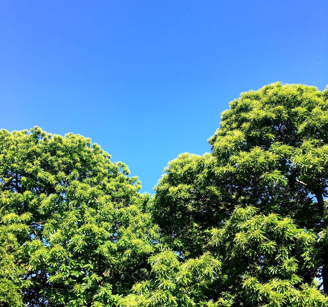 Blue skies - how amazing?