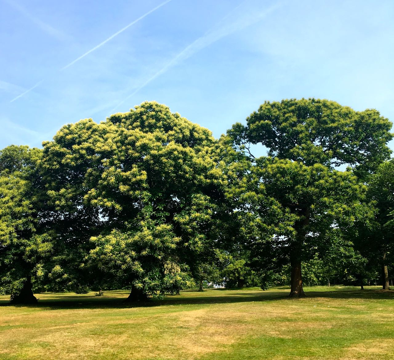Sometimes greenwich park doesn't feel like greenwich park at all
