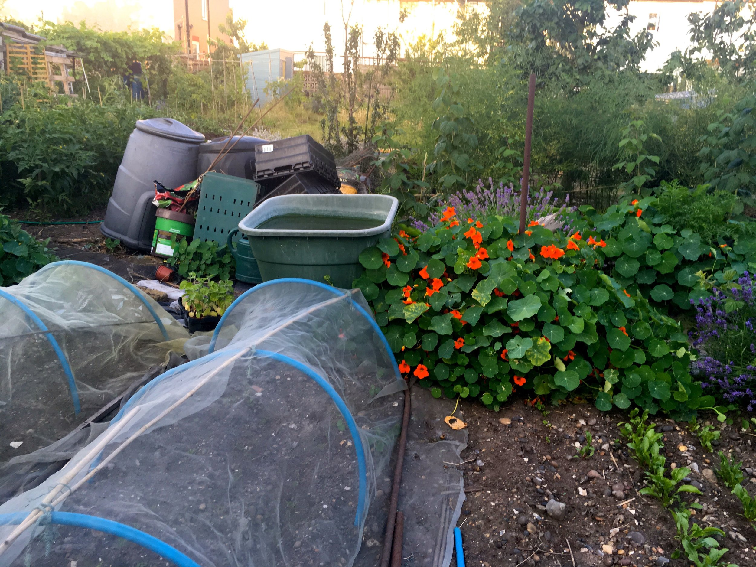 even the storage and compost looks more atttractive