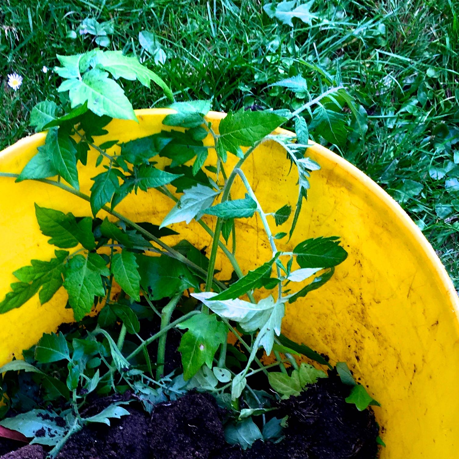 DESTINED FOR THE COMPOST HEAP. SOB.