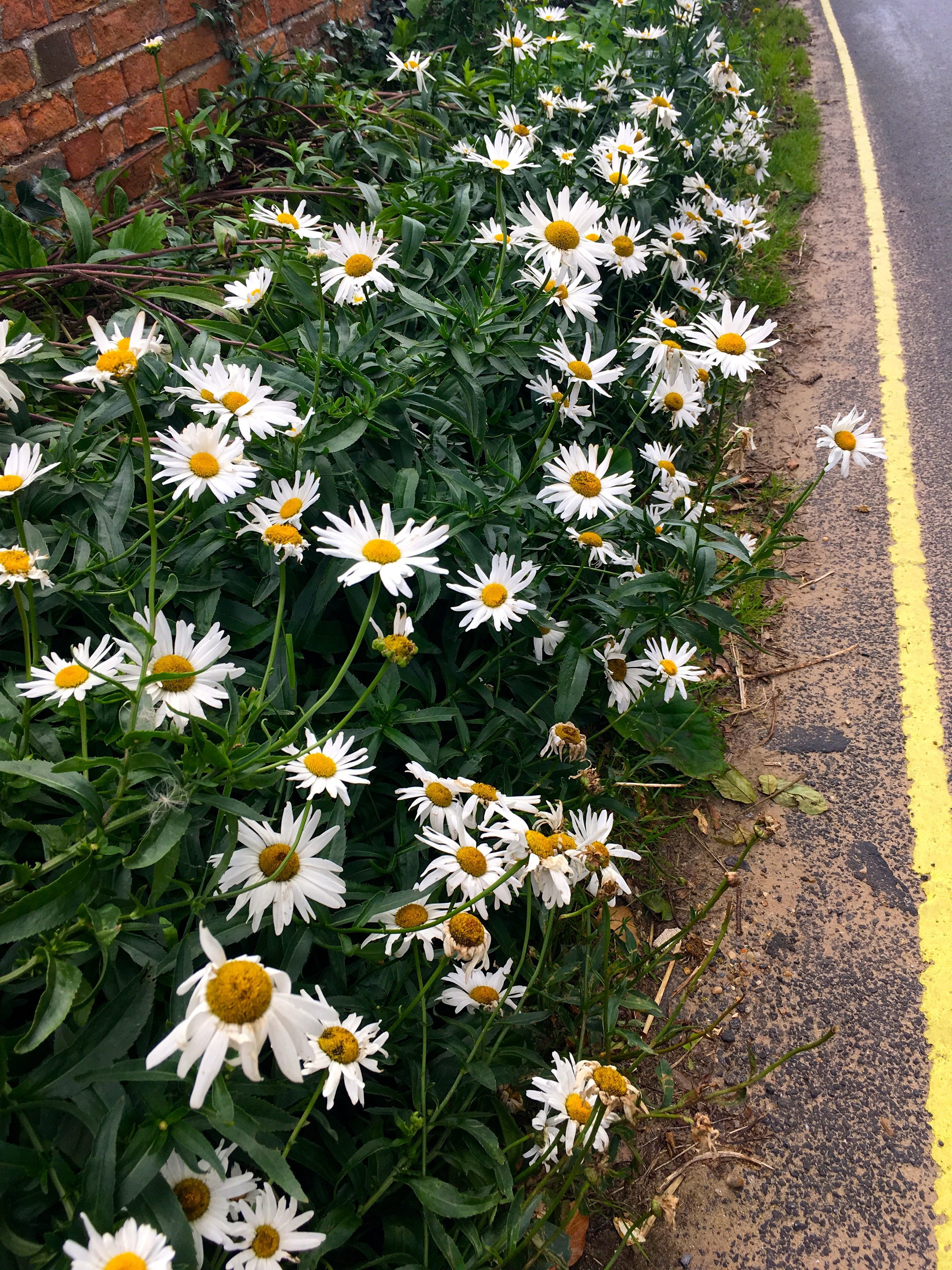 a yellow line to protect the flowers - and the villagers sanity no doubt