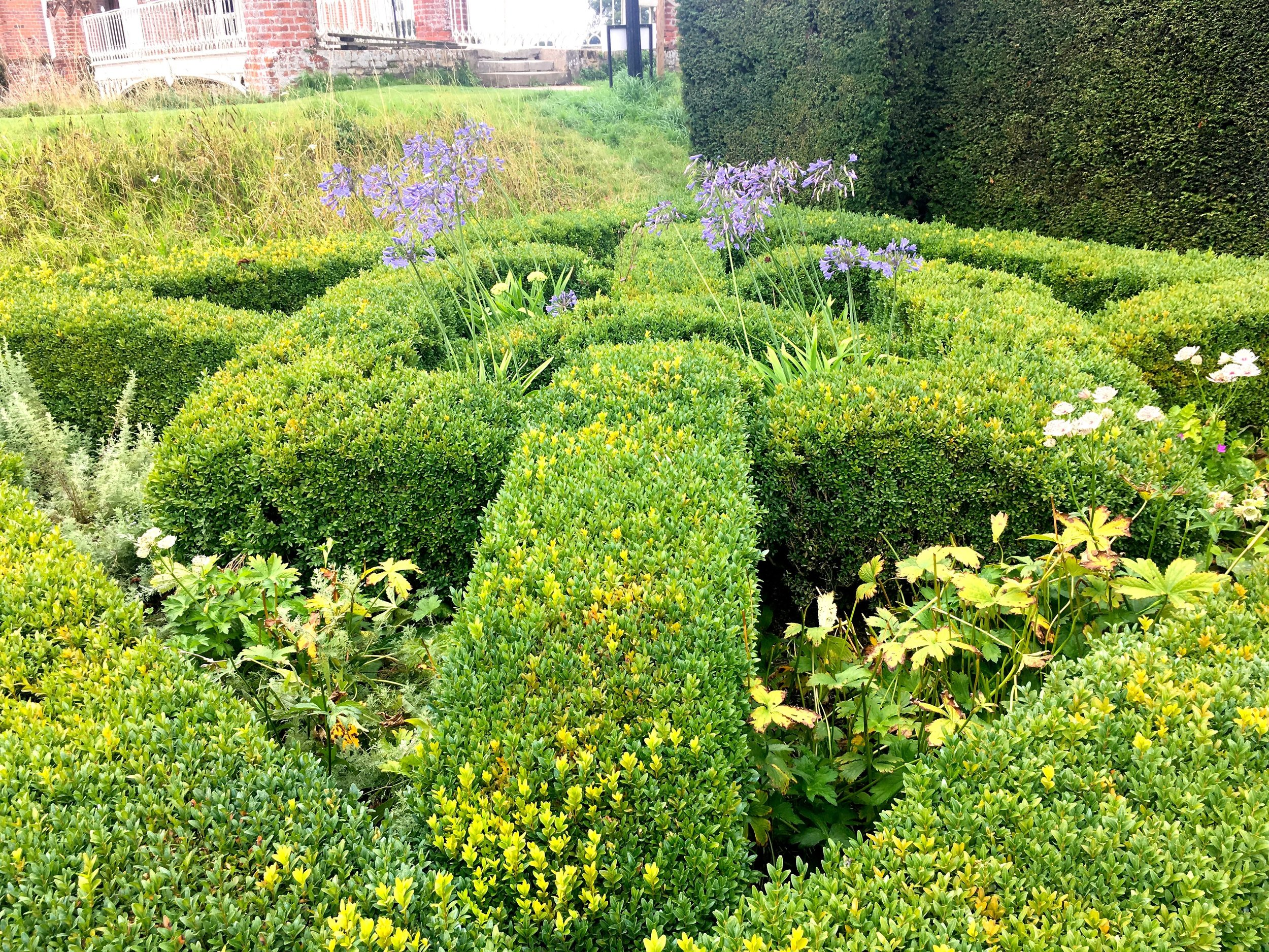 A close up of the hedges in the knot garden at Helmington Hall
