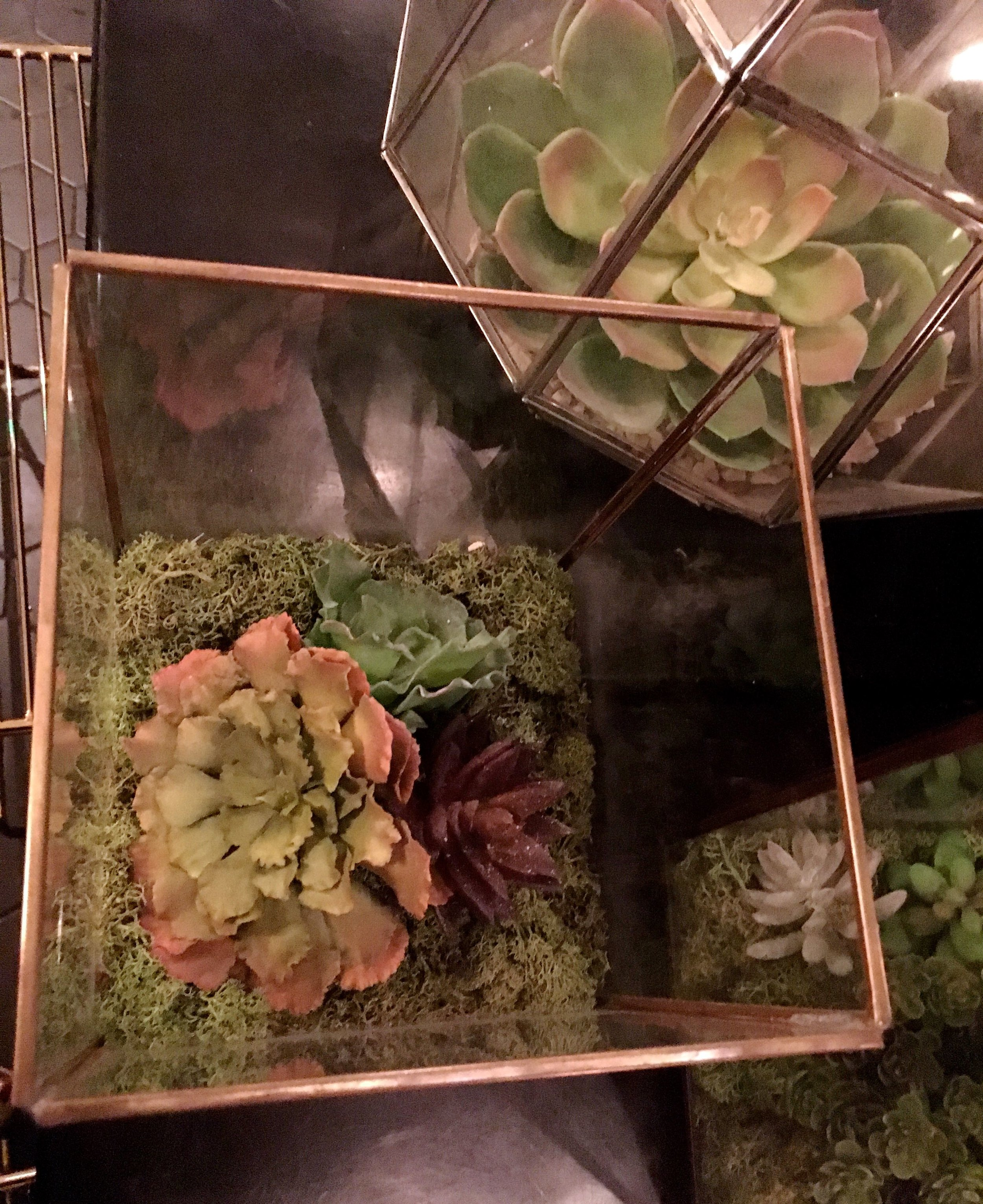Succulents in terrariums in the loos at the Anthologist in the City of London