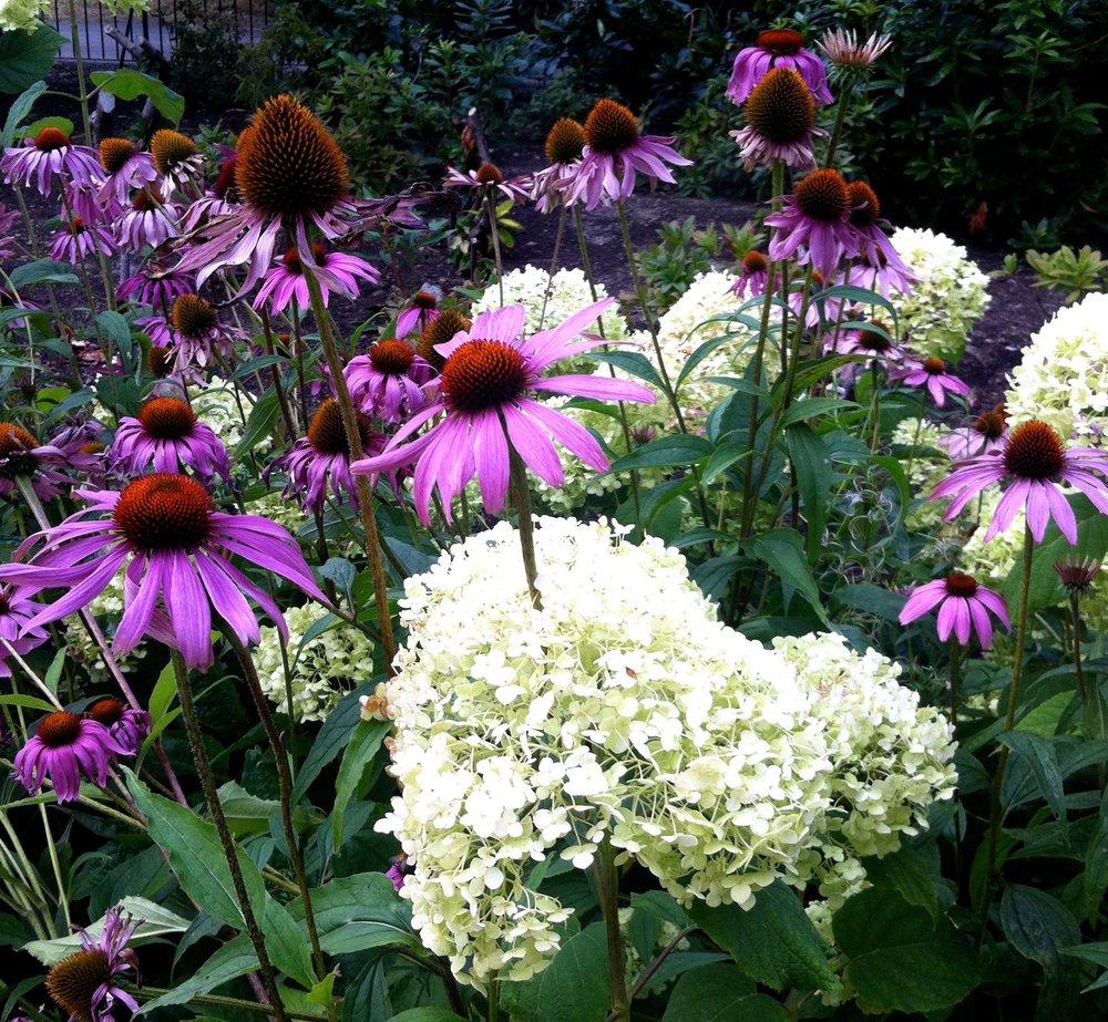 AUGUST: IN THE FLOWER GARDEN