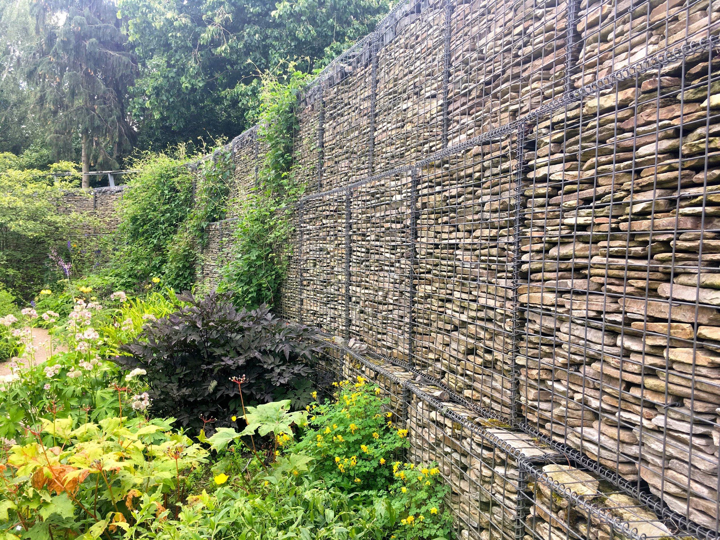 PLANTS WERE HAPPILY CLAMBERING OVER THE GABION WALL