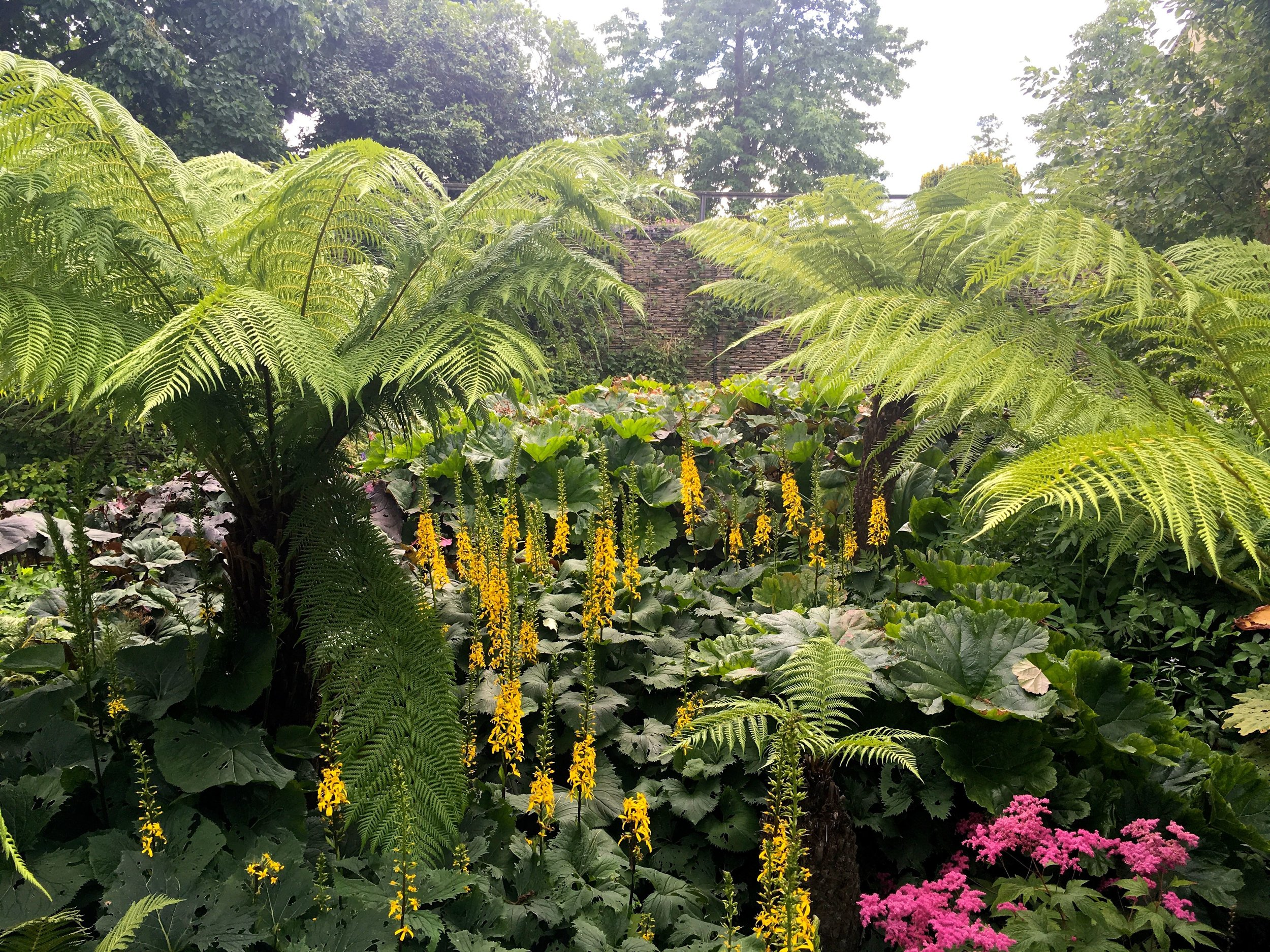 LUSCIOUS EXOTICS IN THE BOGGY AREA in the Robinsons garden at Hyde Hall in Essex