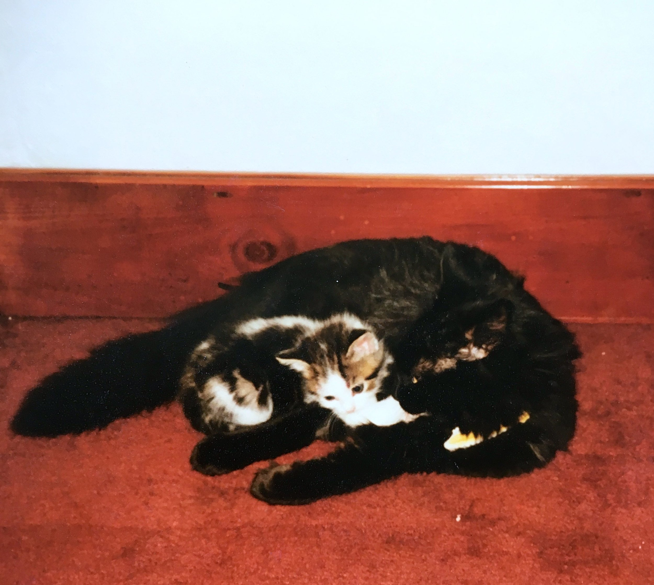 SMALL CAT #2: TESSA (SNUGGLING WITH HER DYLAN)