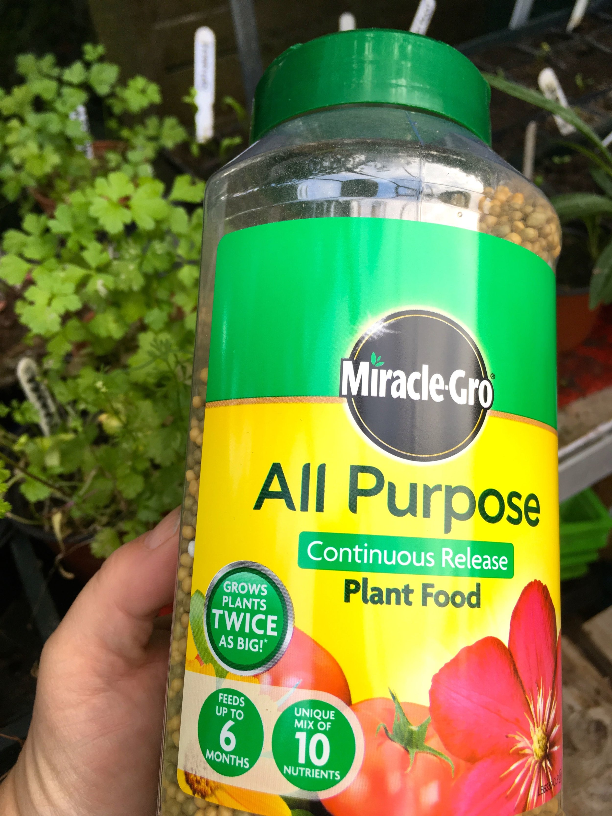 Using Miracle-Gro all purpose plant food in the greenhouse