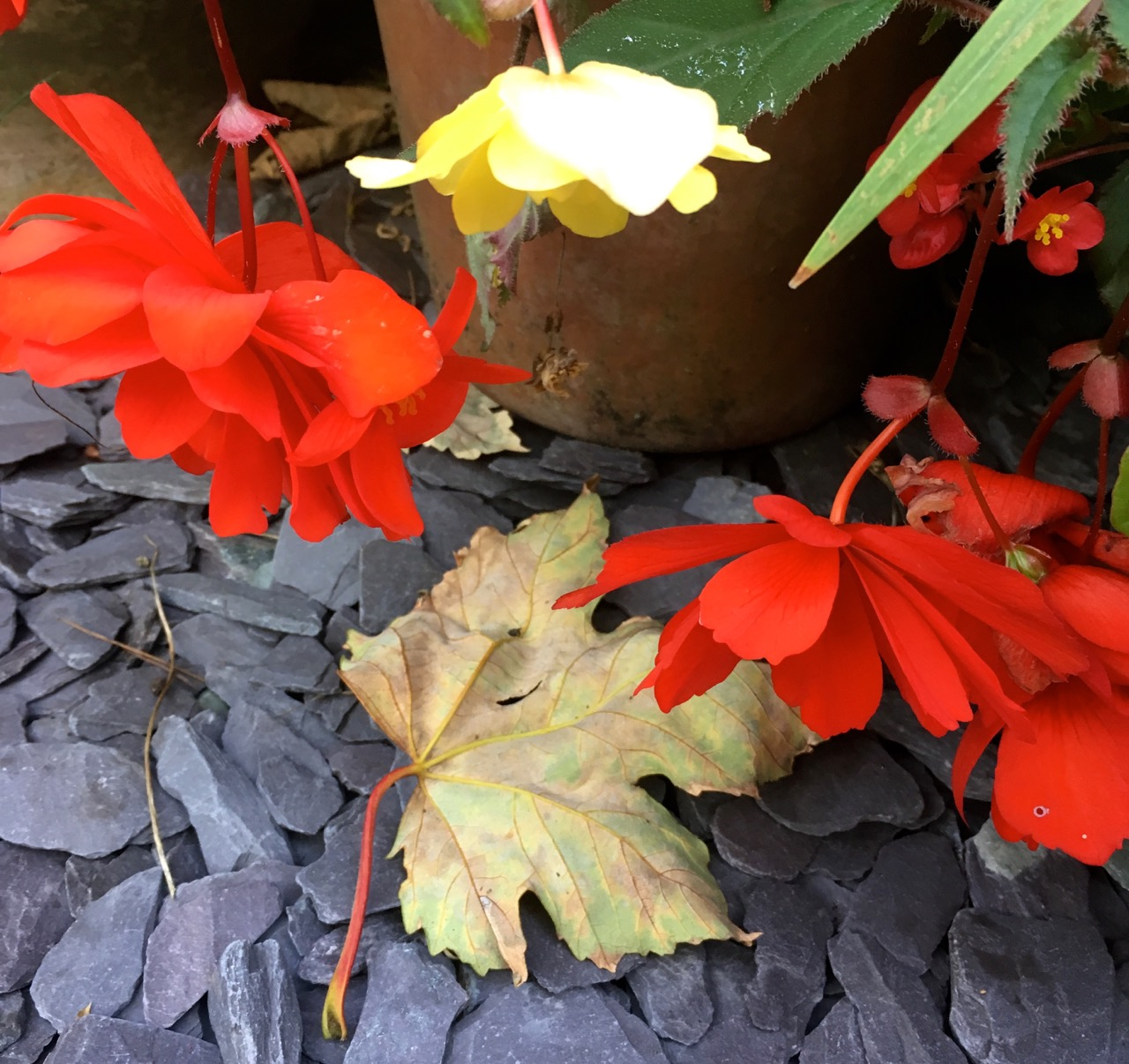 summer bedding and autumn leaves