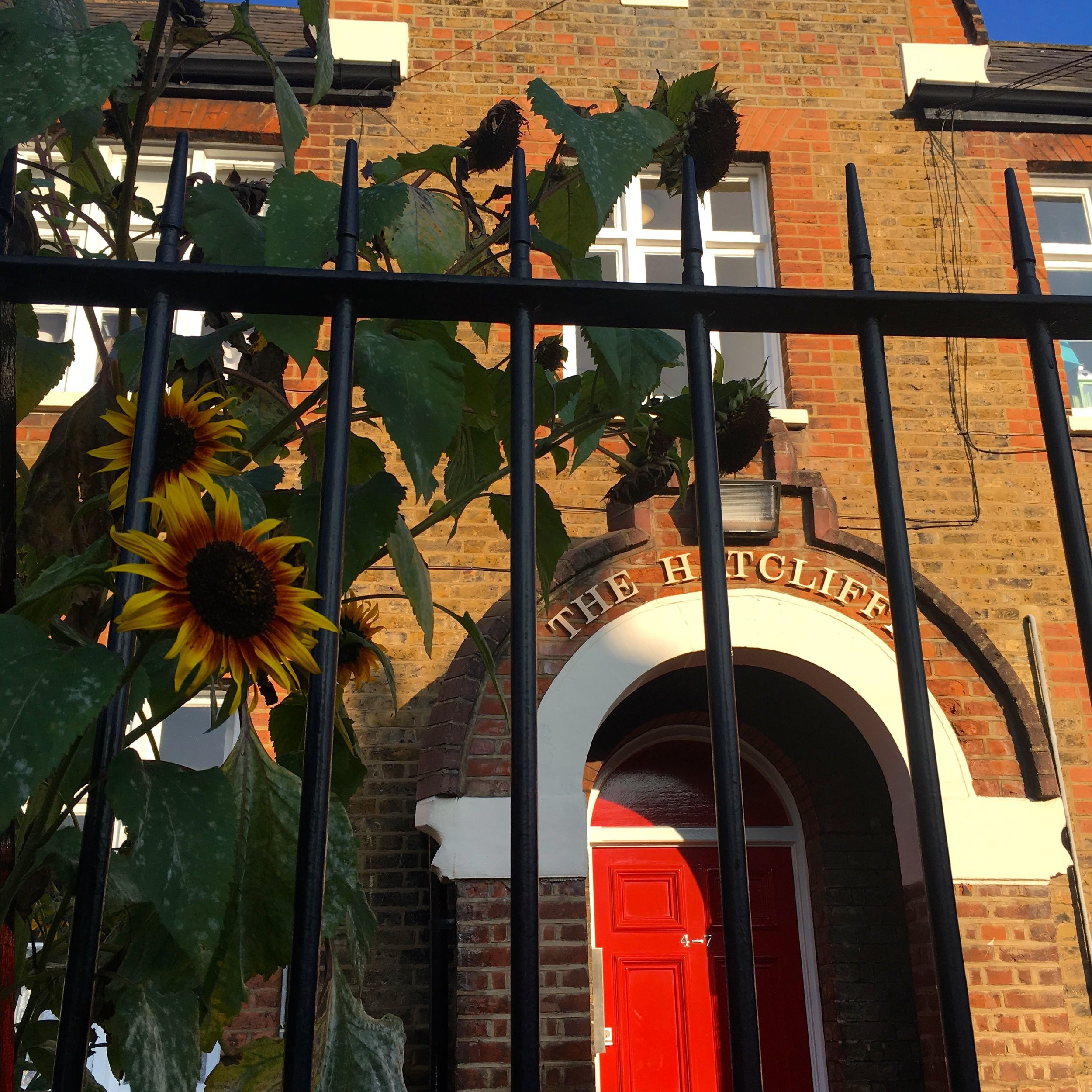 almshouses with sunflowers and a red front door in greenwich