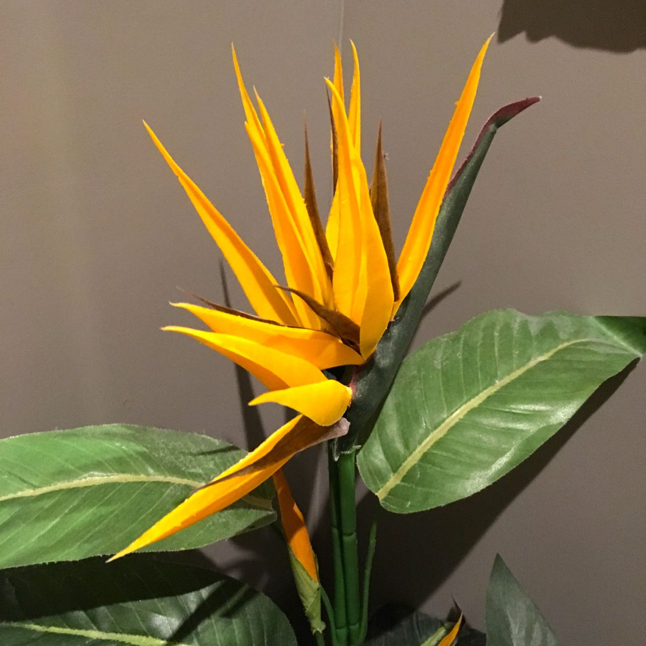 Sharing the loo with a bird of paradise
