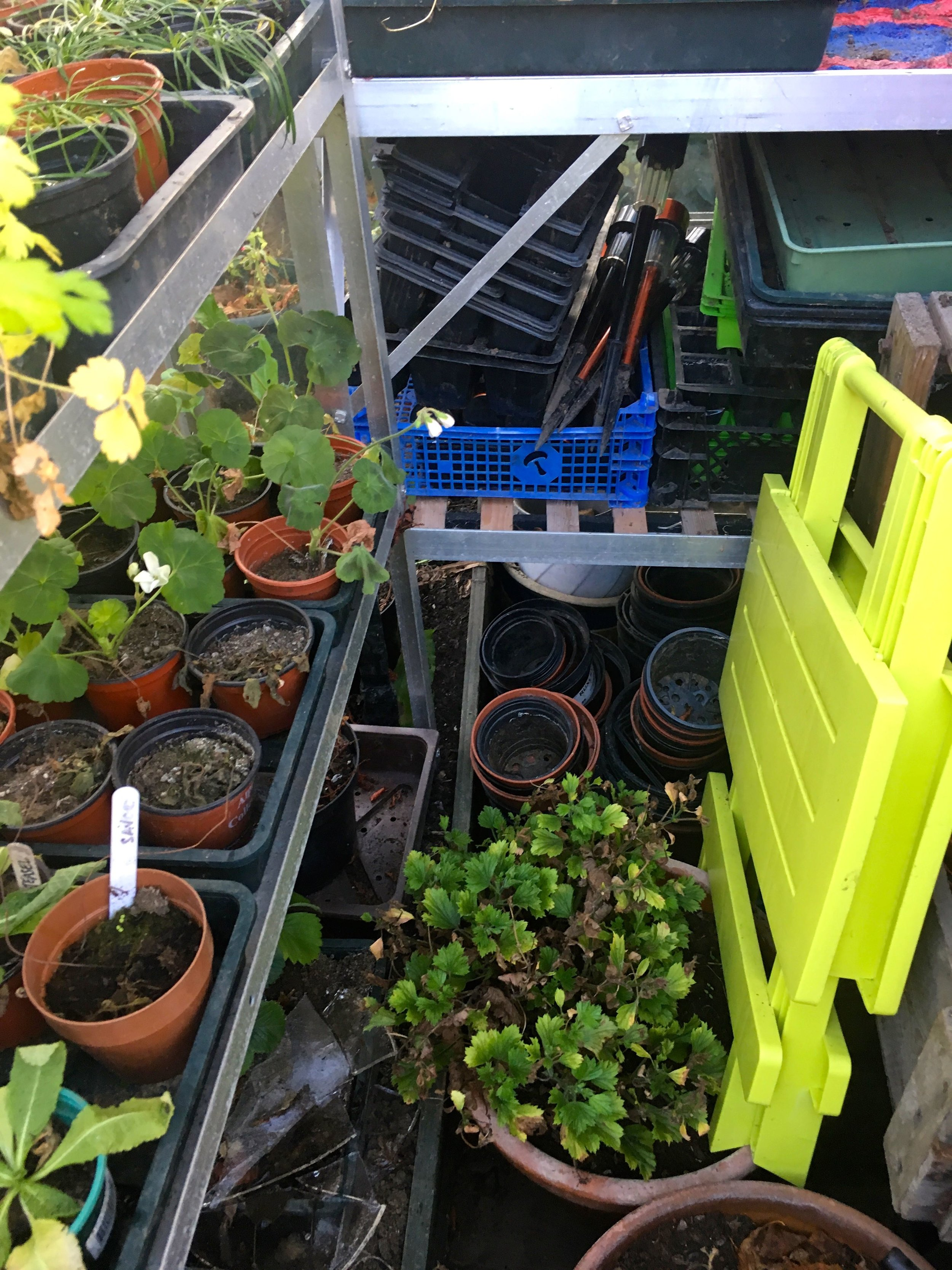 And the greenhouse floor is pretty full too