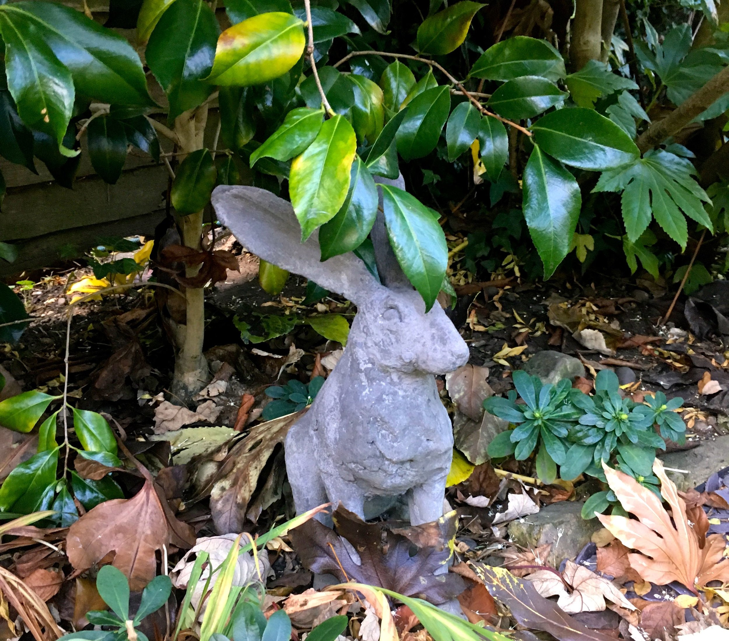 our concrete hare sheltering under the camelia