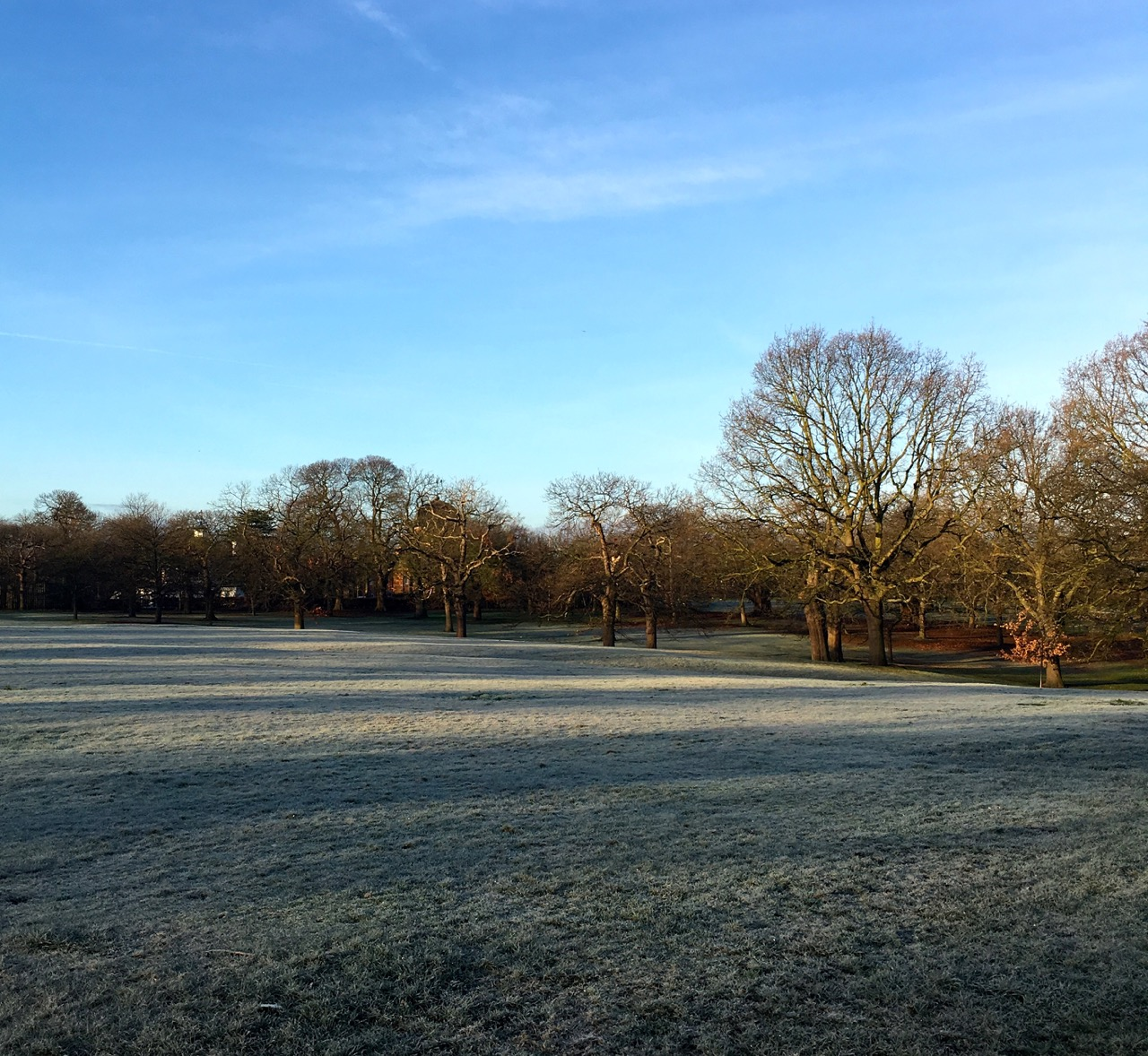 A frosty morning in Greenwich Park