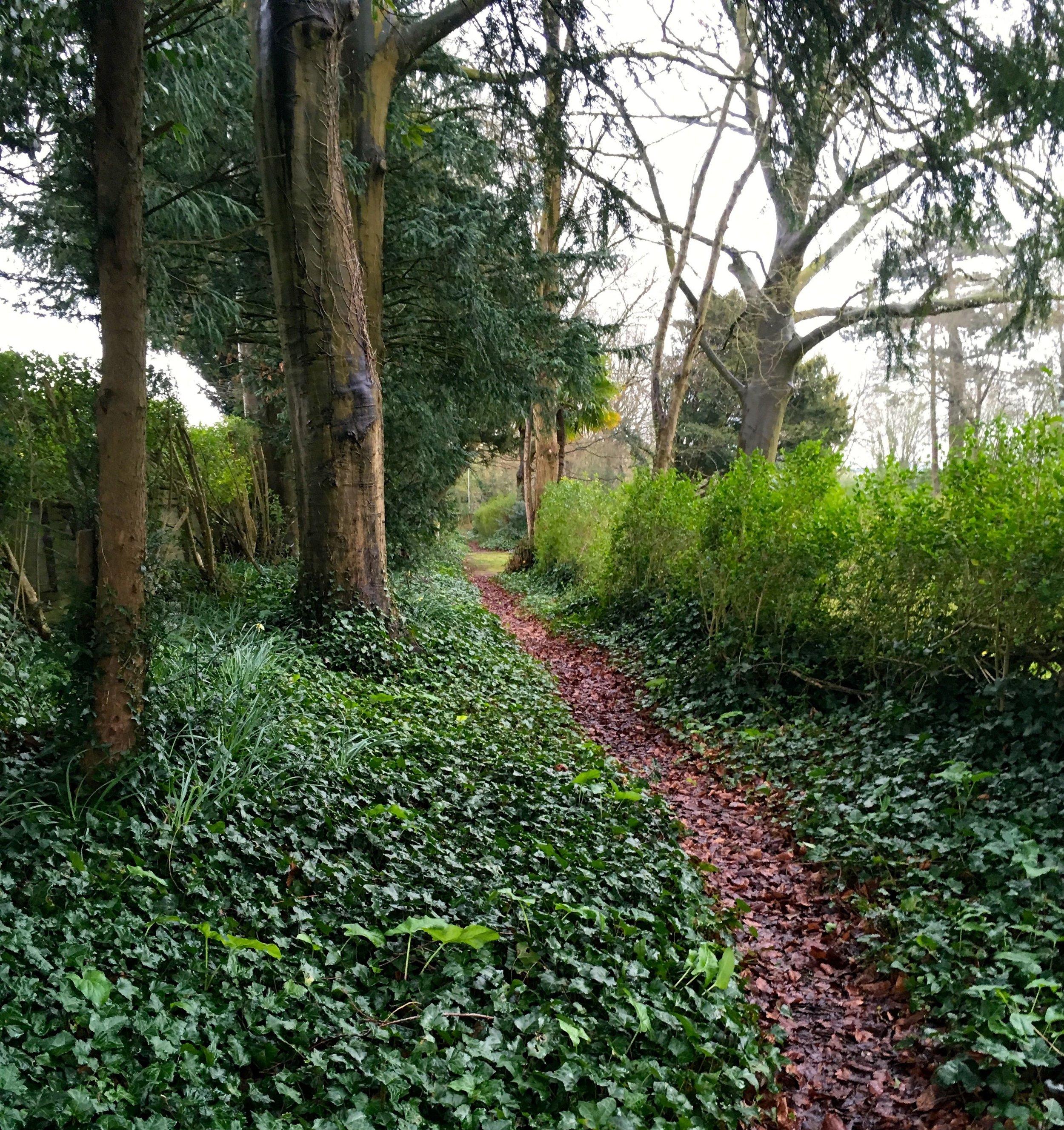 The woodland walk in Max Gate garden.jpg
