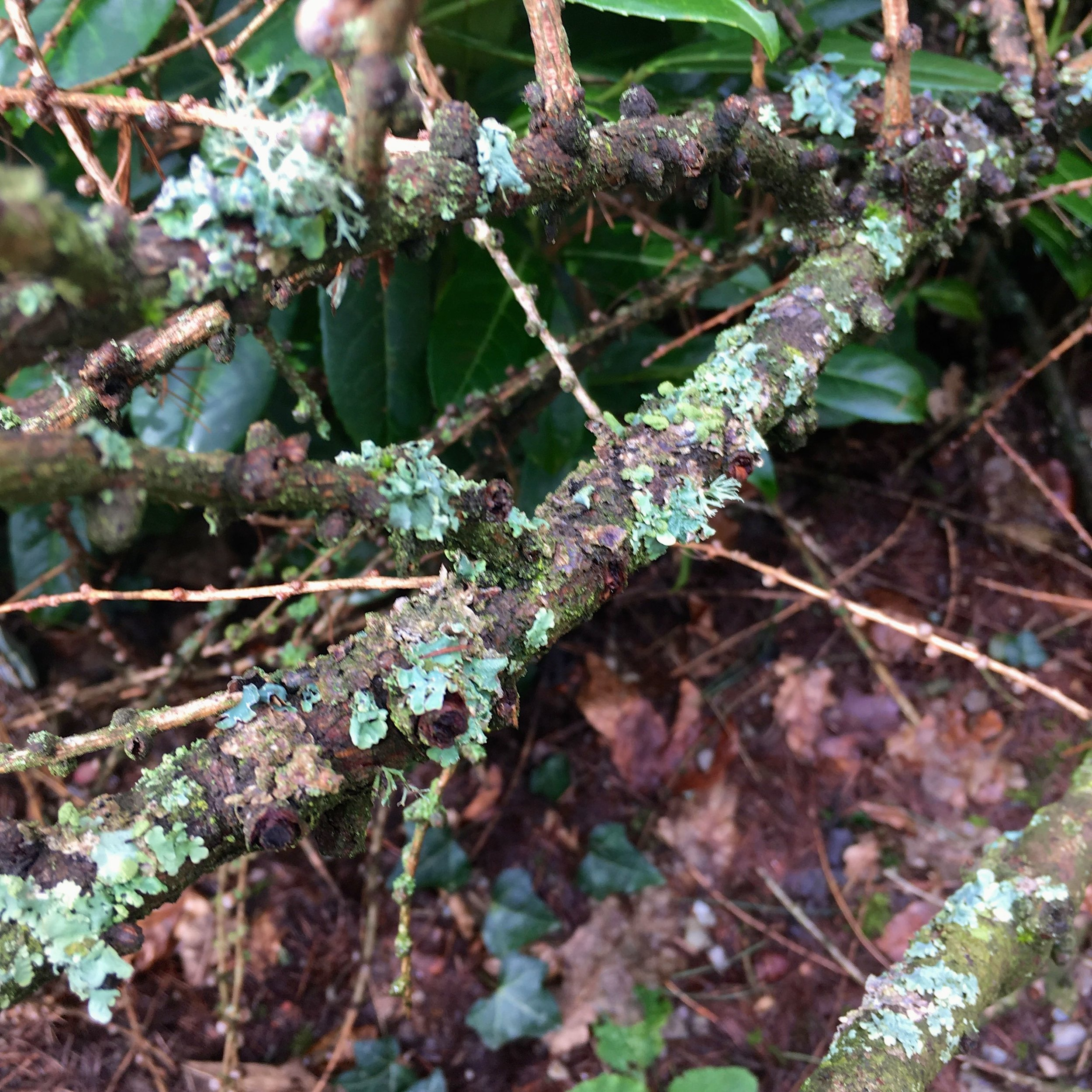 Exploring the grounds and admiring the lichen at Hestercombe
