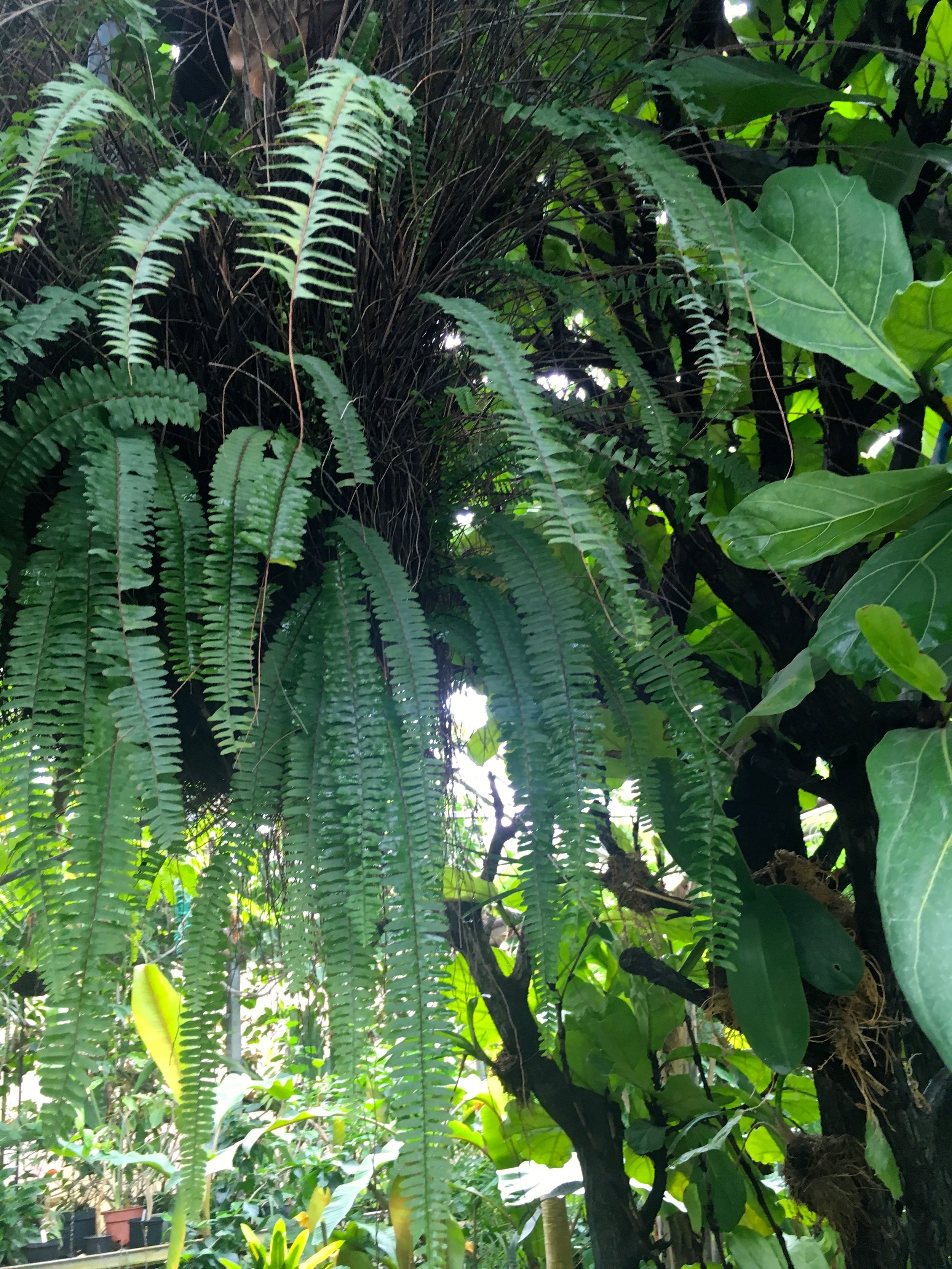 Lush leaves in the tropical zone at Cannington