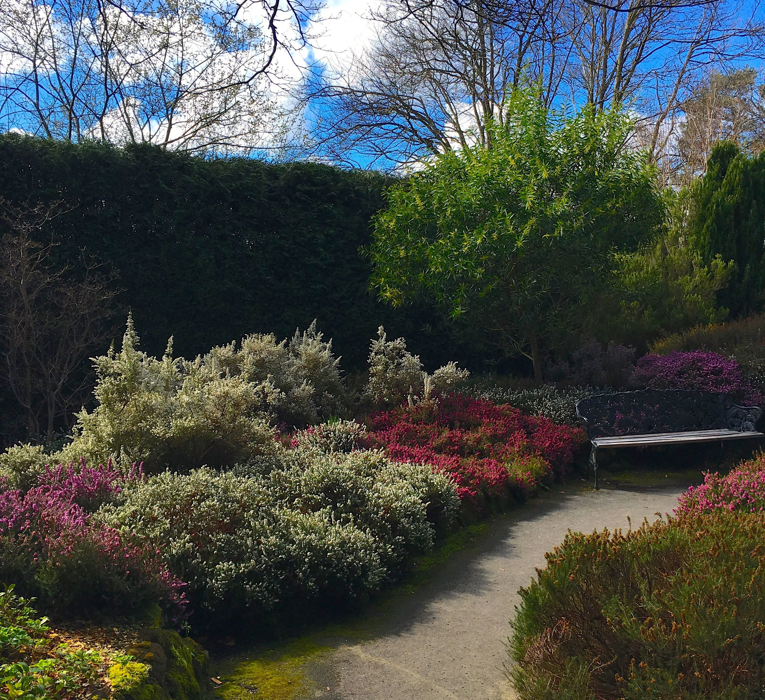 A lovely march day in the Heather Garden at Compton Acres