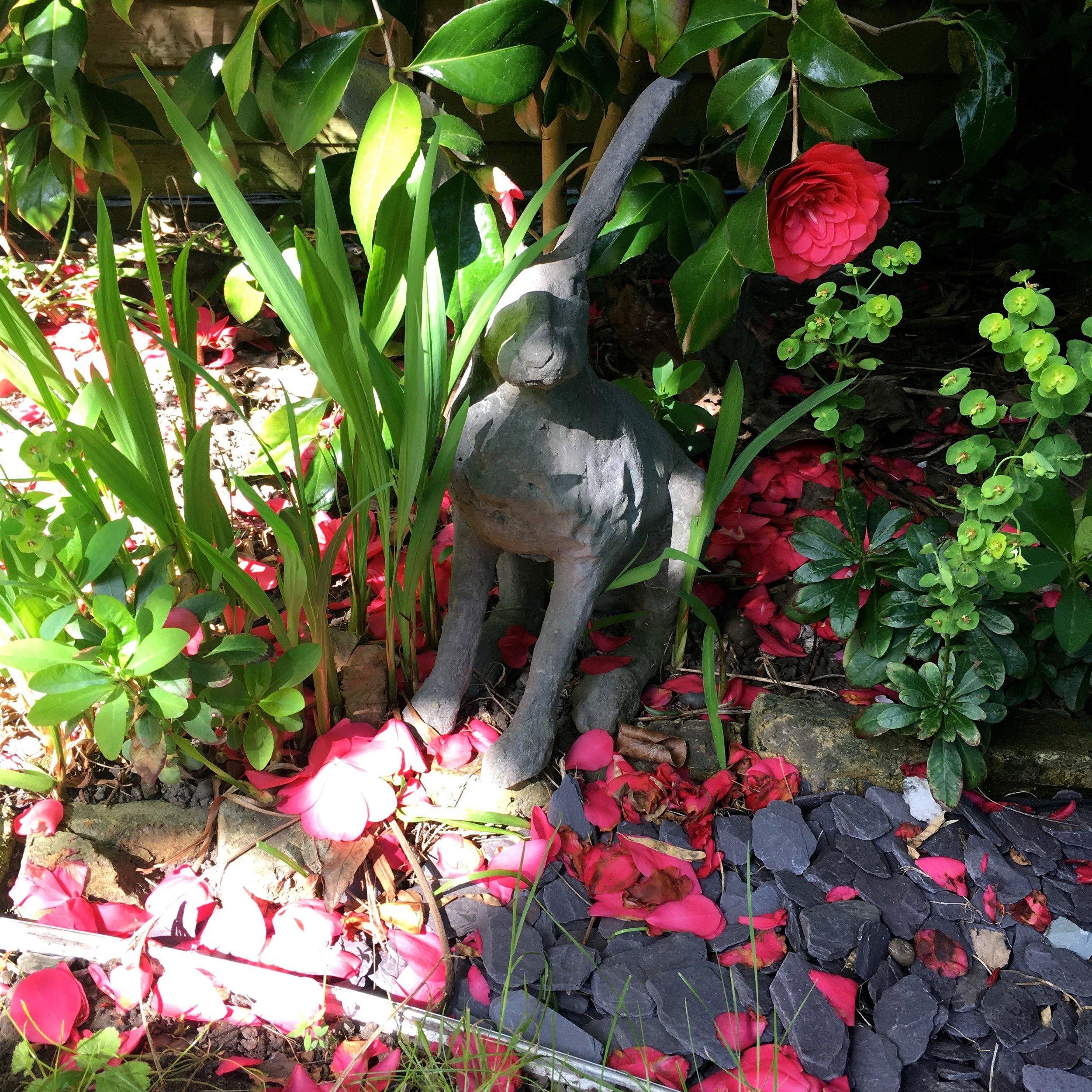 a hare amongst the camelias
