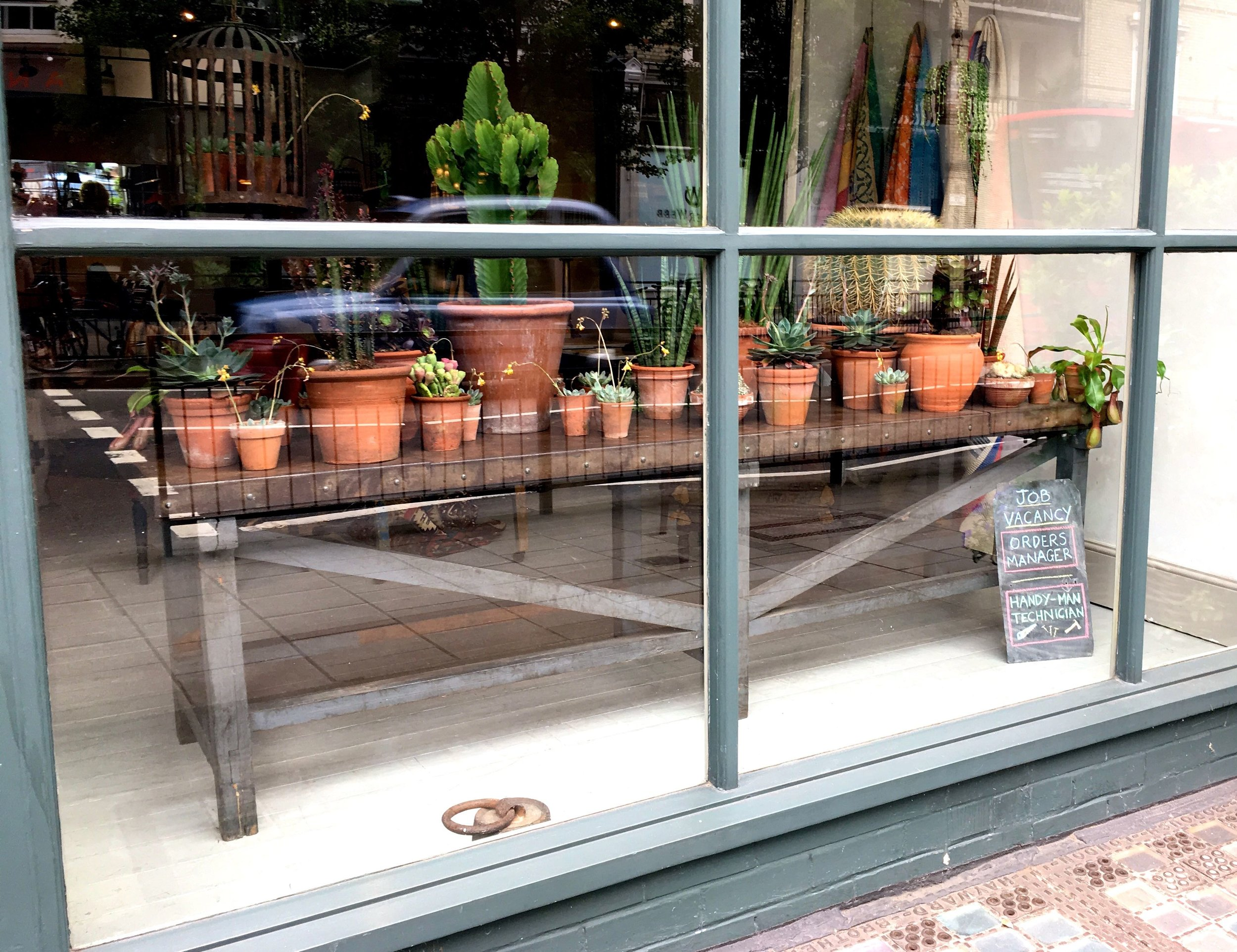 A table full of terracotta pots, cacti and succulents