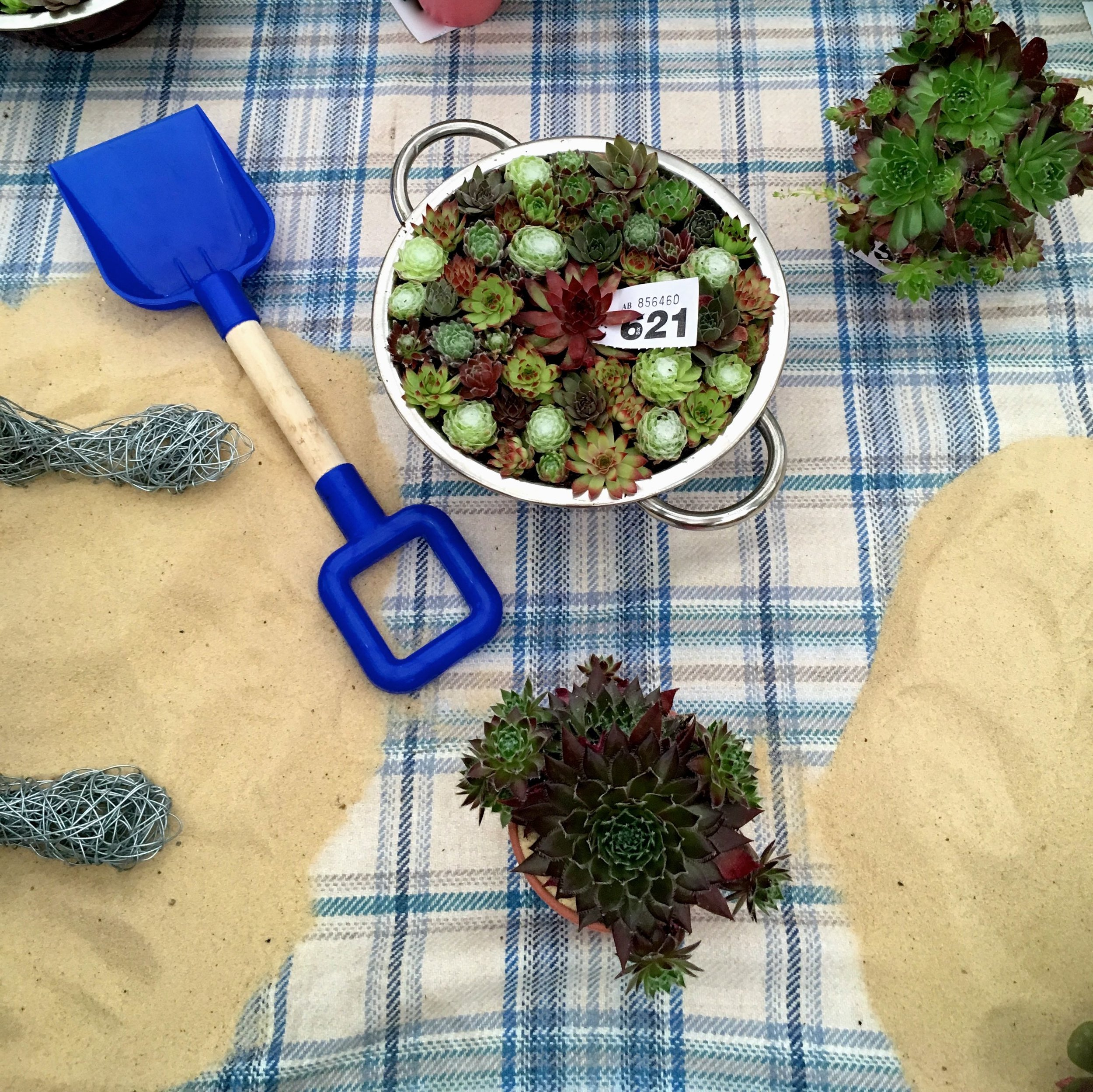succulents and a spade on the beach at Gardeners' World Live