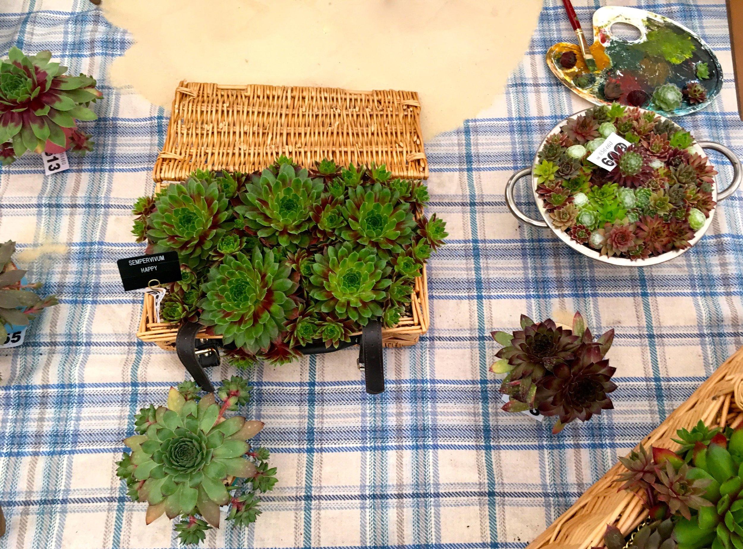 a wicker basket of succulents