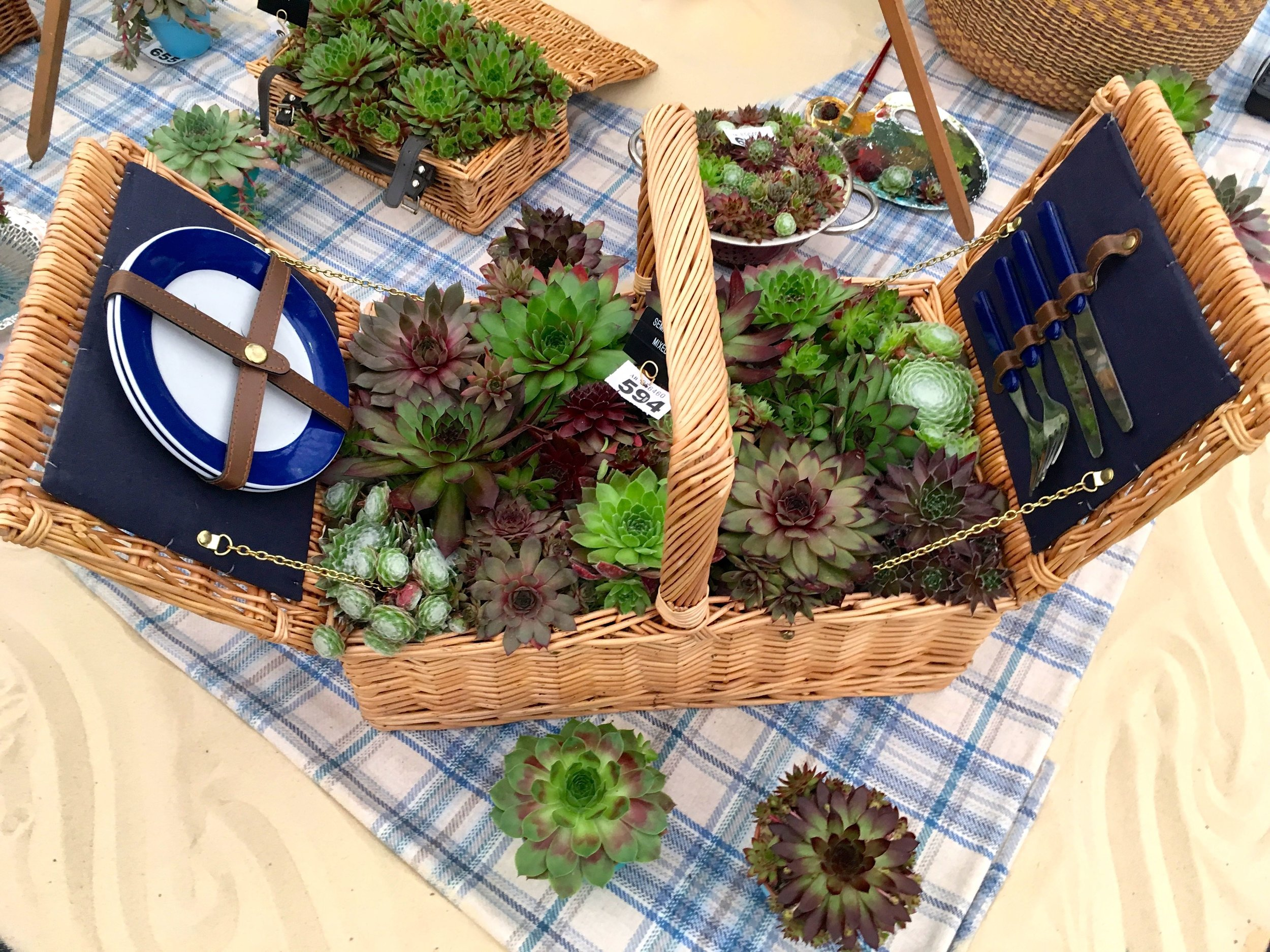 the ultimate picnic basket with succulents galore