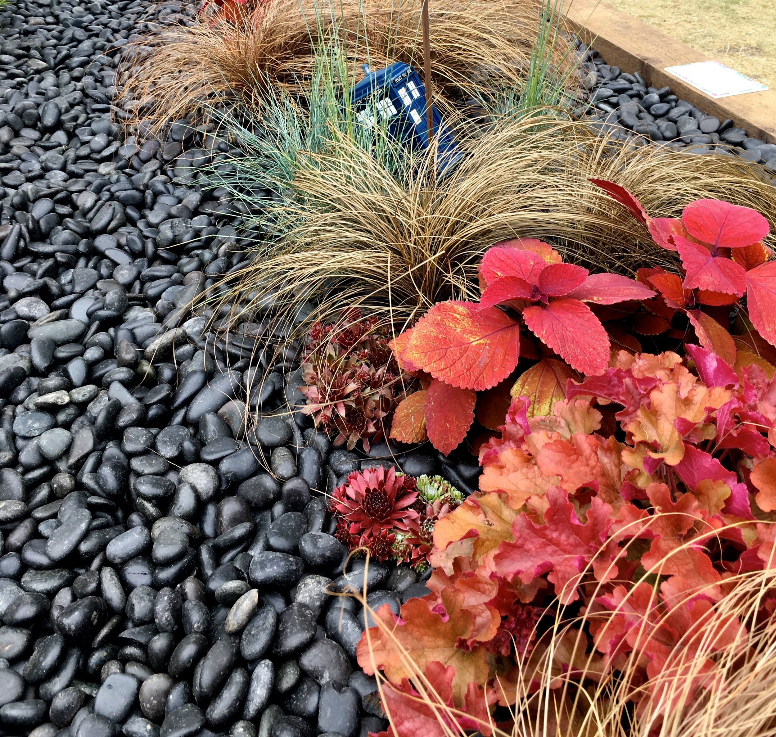 red and burgundy plants against the pebbles