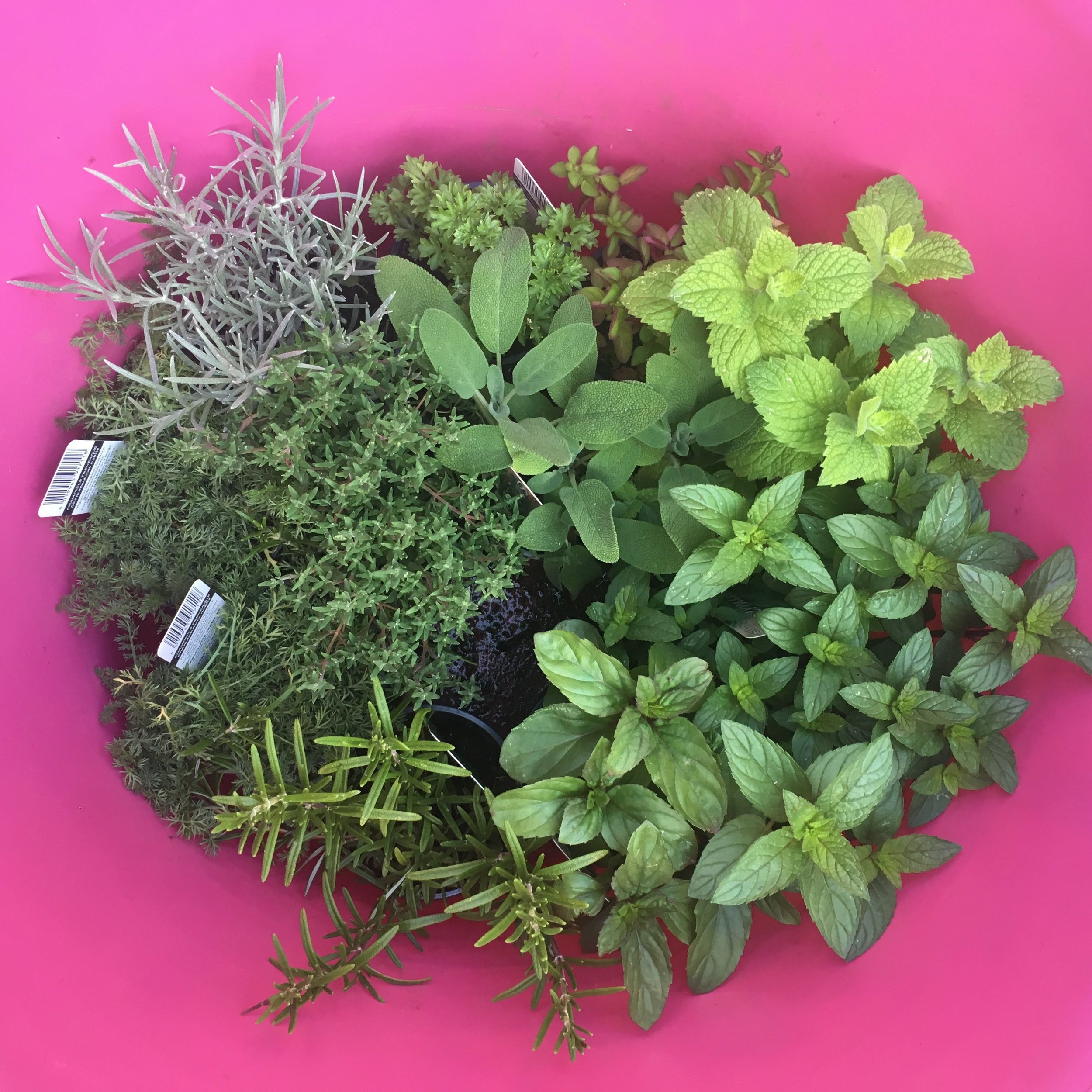 my next job - finding a new home for the herbs