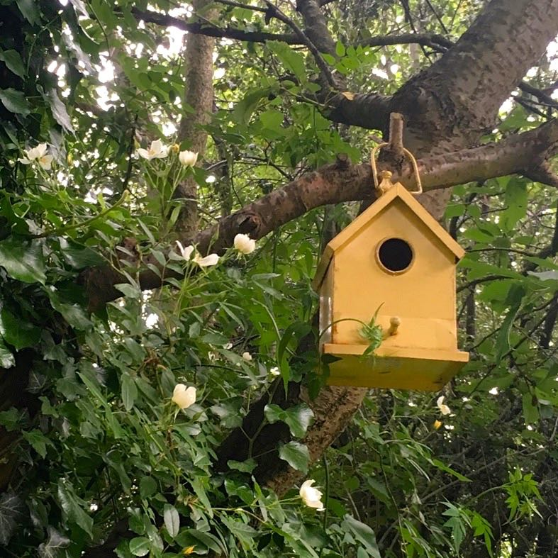 we might have residents in our bird house