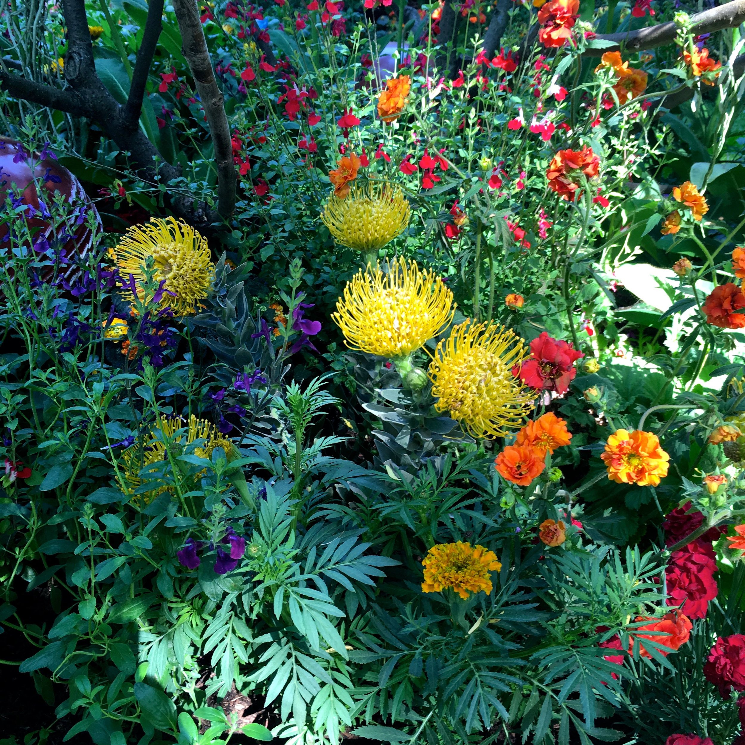 yellow red and orange planting in the British Council garden at Chelsea