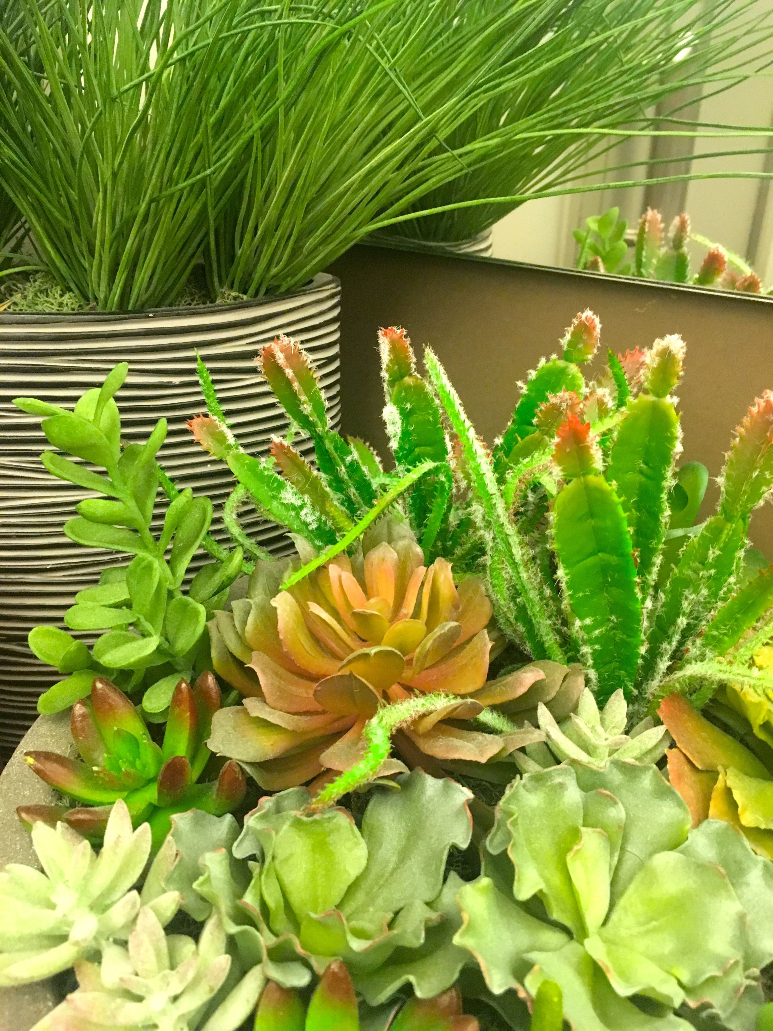 A close up of the corner plants