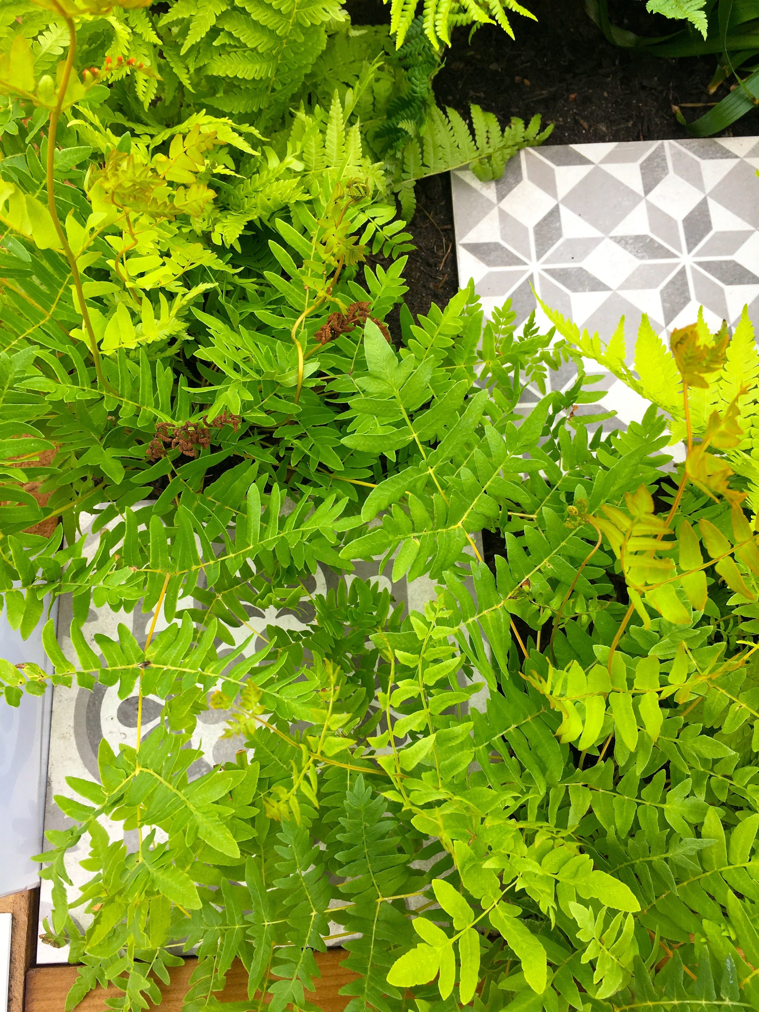 fronds of fern and patterned tiles at gardeners' world live