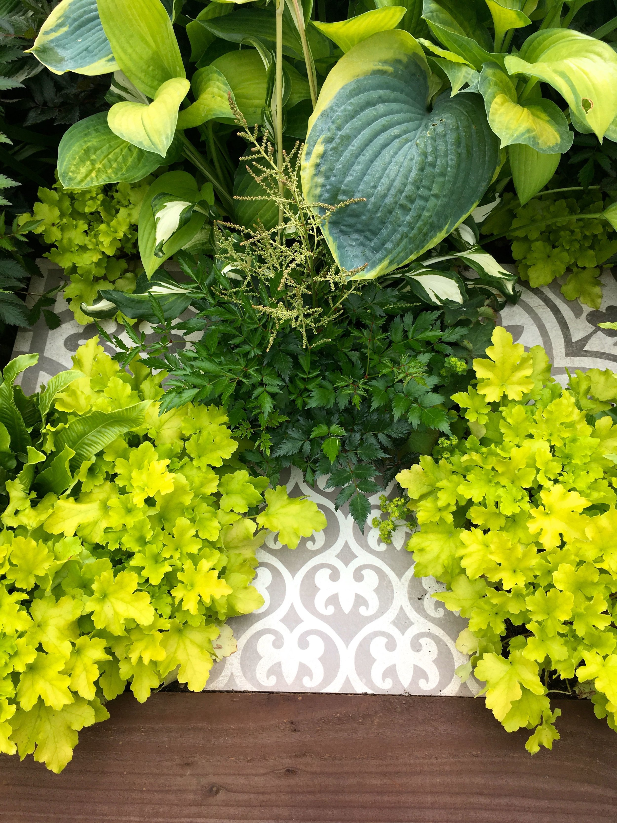 hostas and yellow-y greens spilling over patterned tiles
