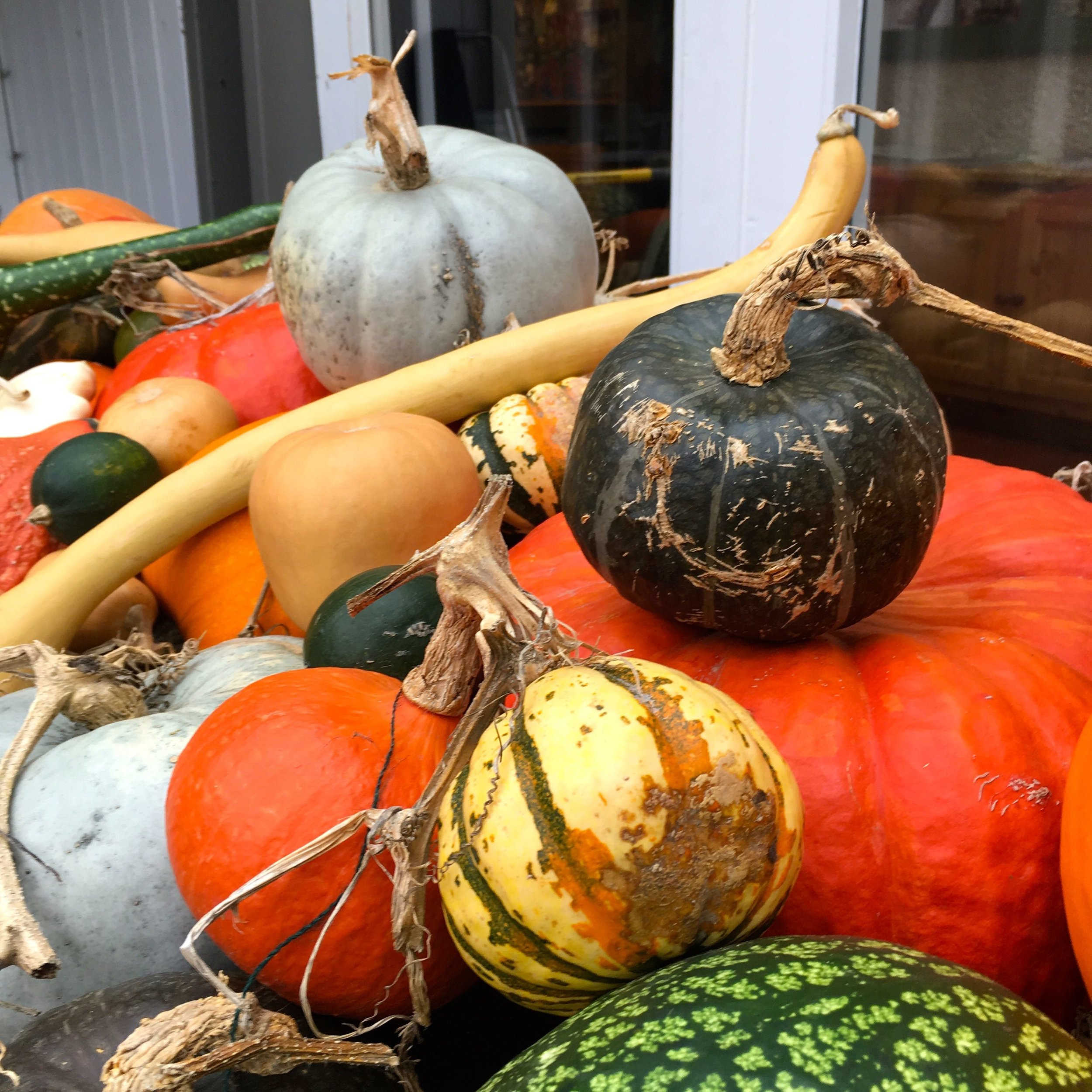 pumpkins of all shapes and sizes