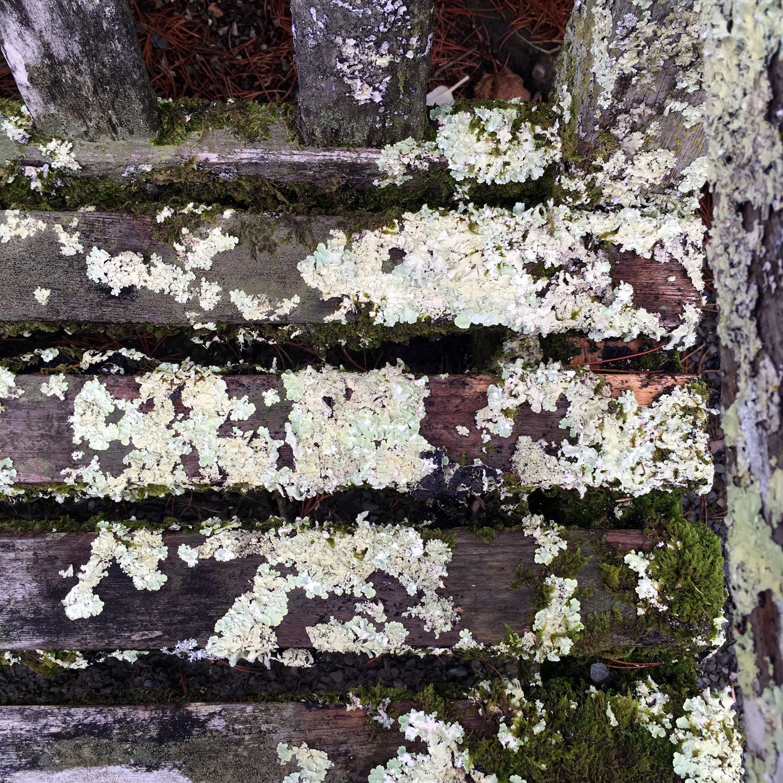 Lichen on the seat