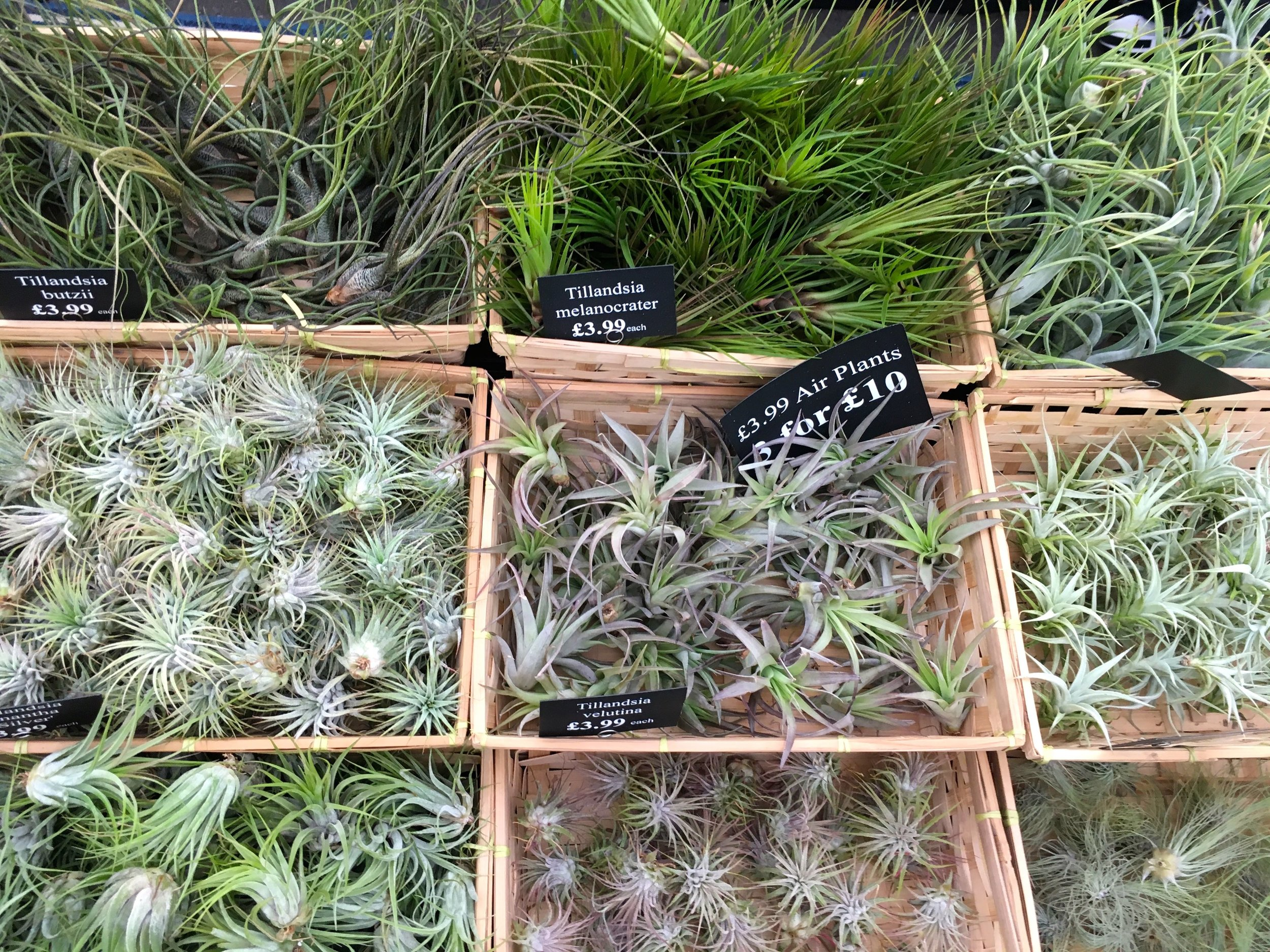 choose your own air plants at gardeners' world live