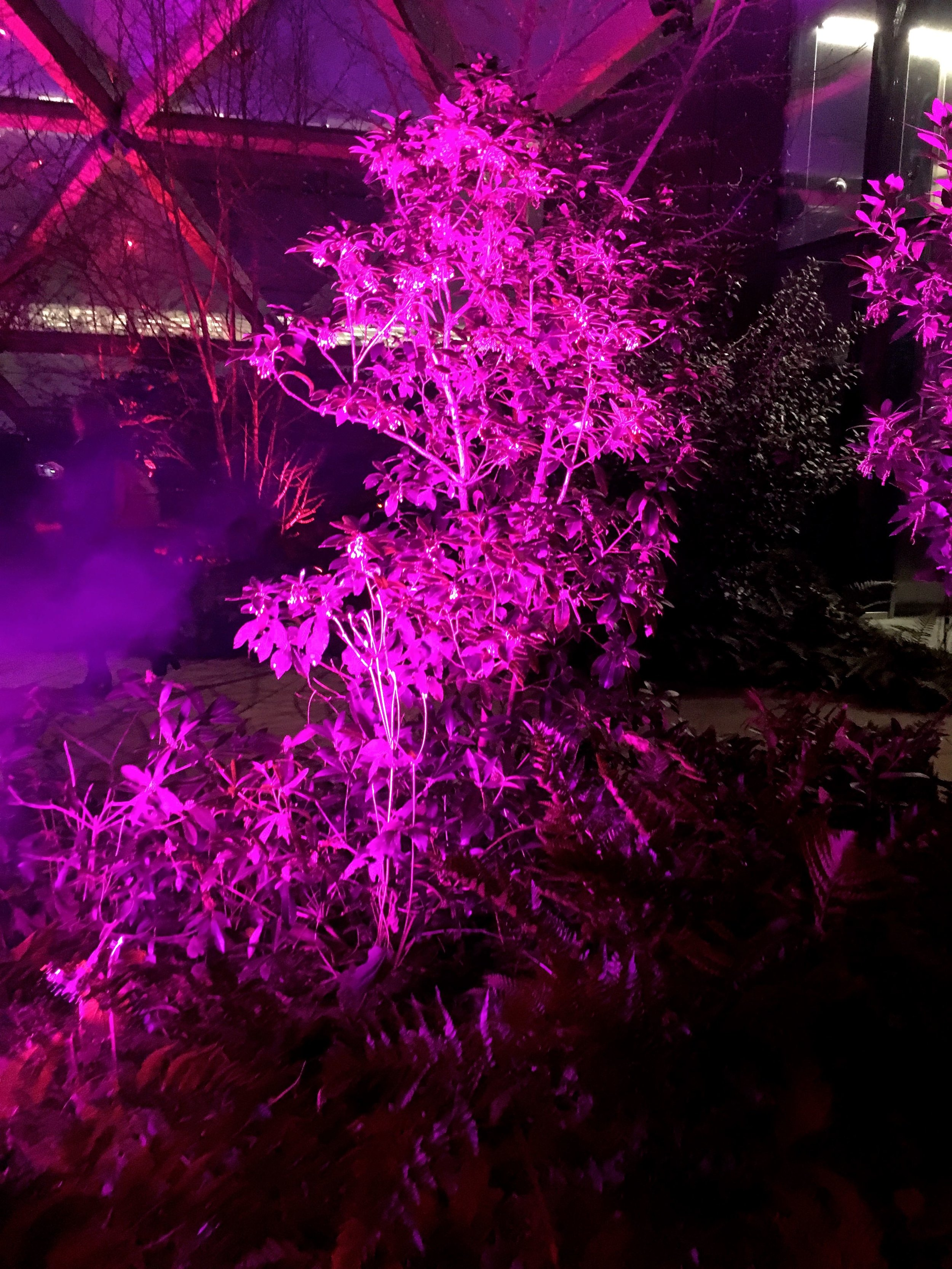 lit up pink - another colour in the crossrail place garden
