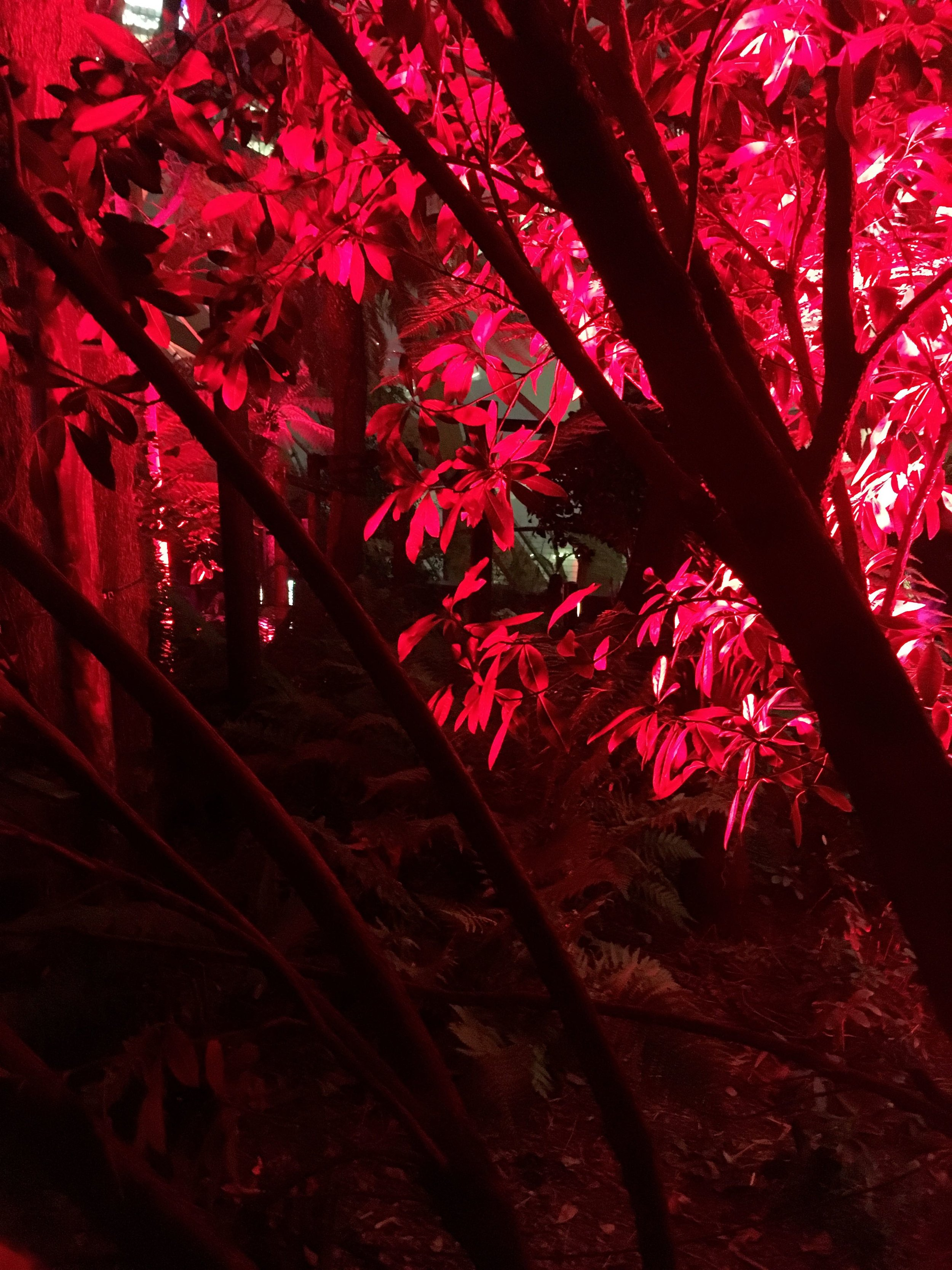 leaves lit up red and looking great
