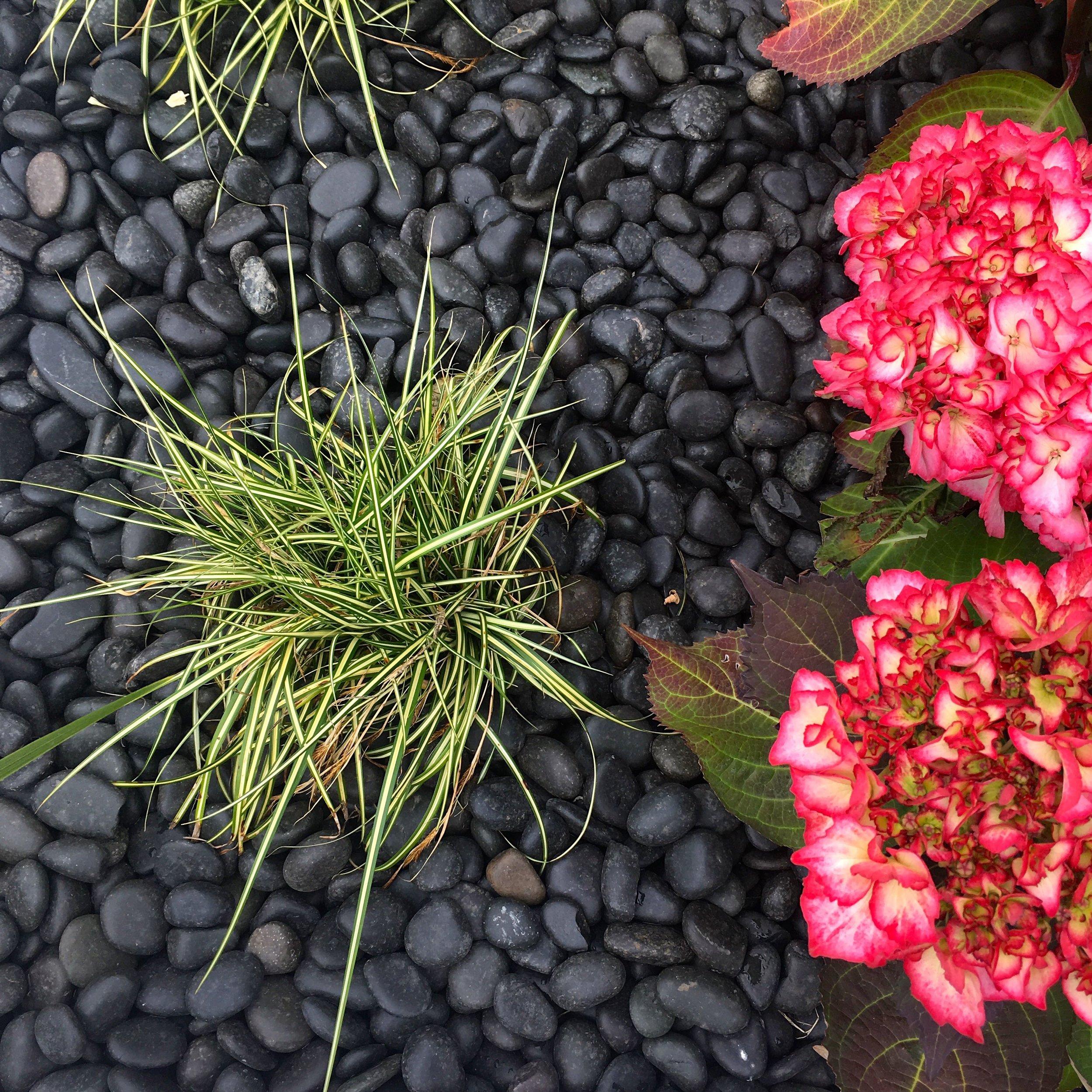 At Gardeners' World Live.jpg