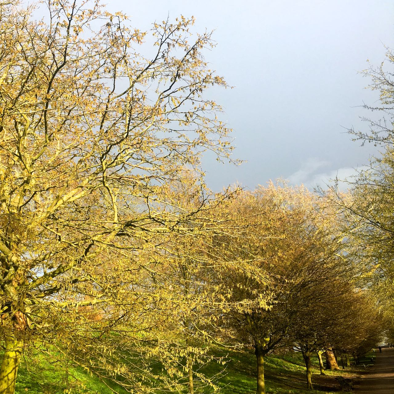 Moody skies and sunlit trees in Greenwich Park