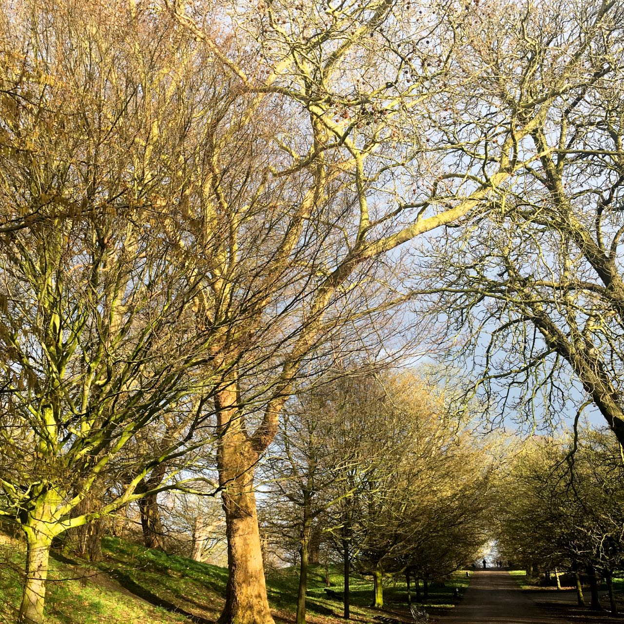 trees springing into life in Greenwich park