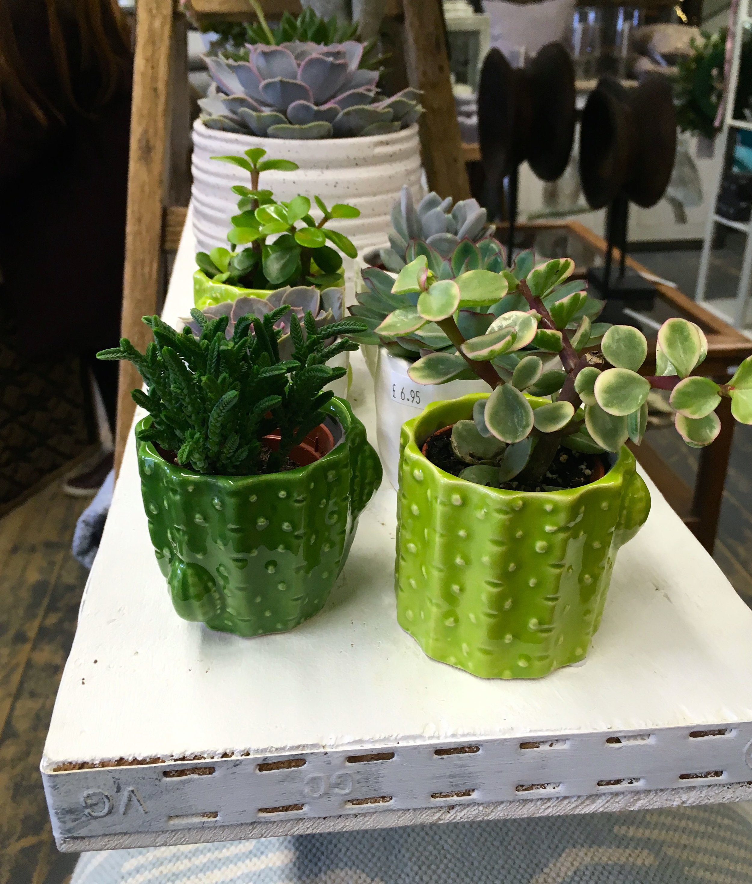 succulents in green pots