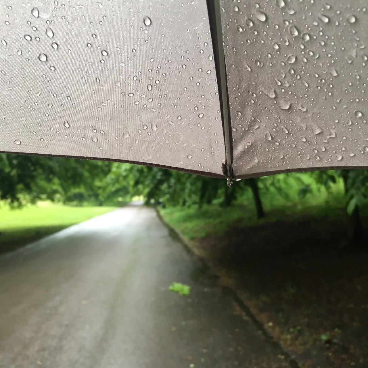 Rain in Greenwich Park