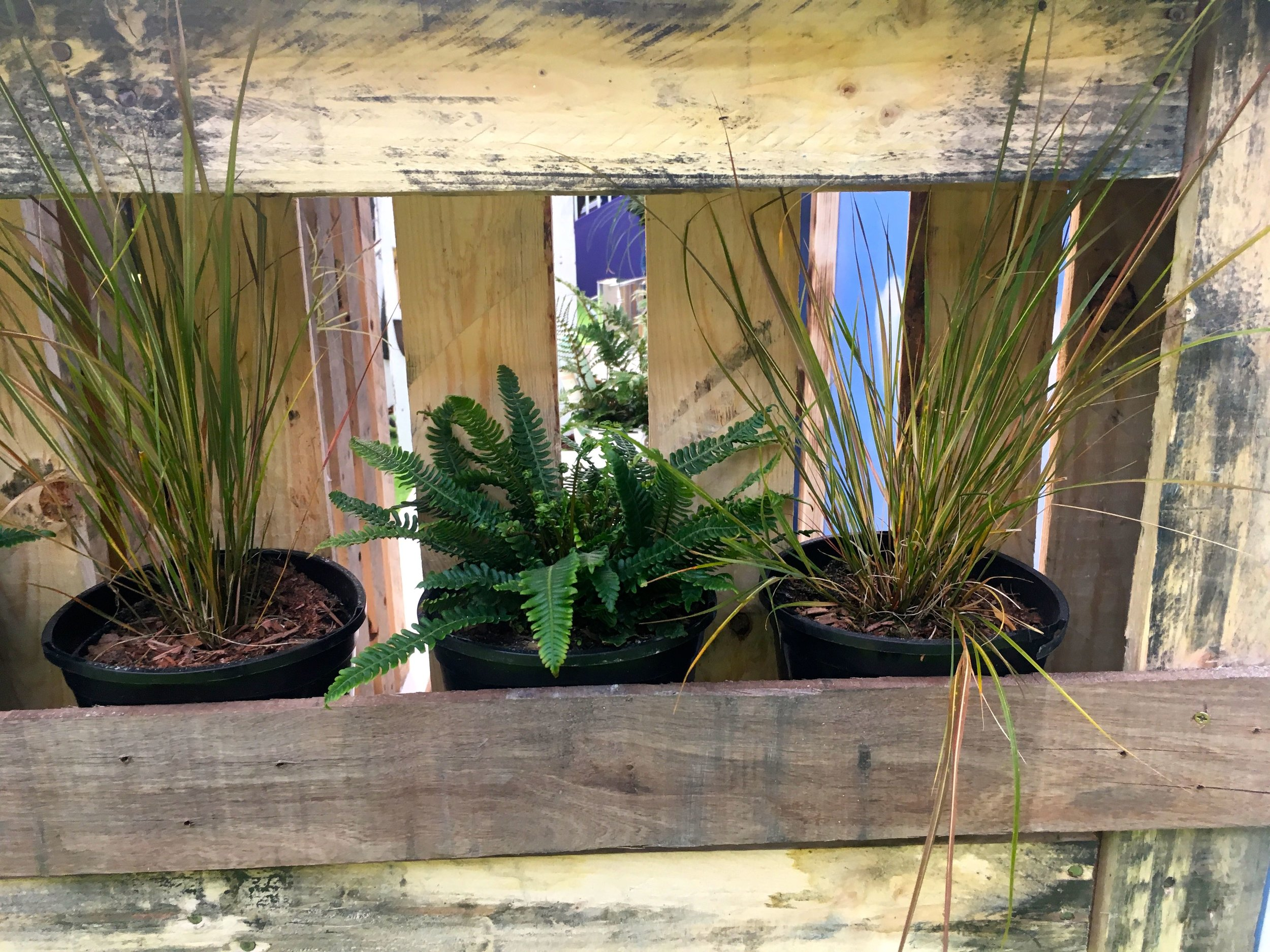 A pallet as a planter in the Ideal Home Show