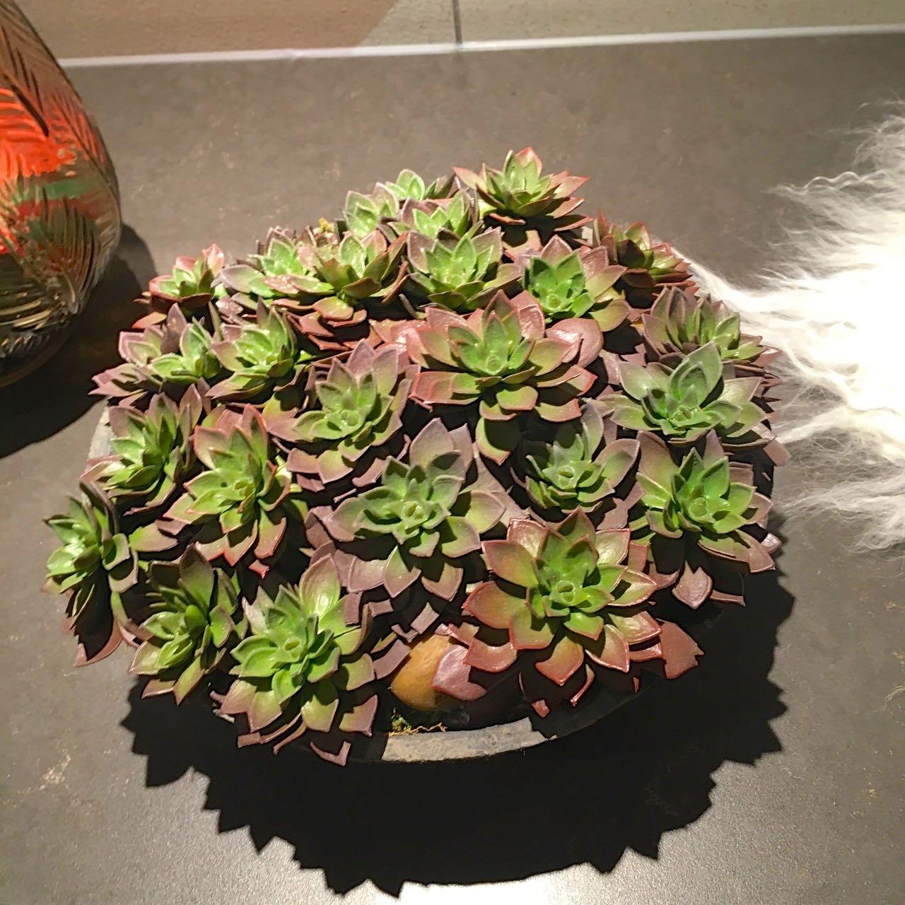 a bowl of succulents