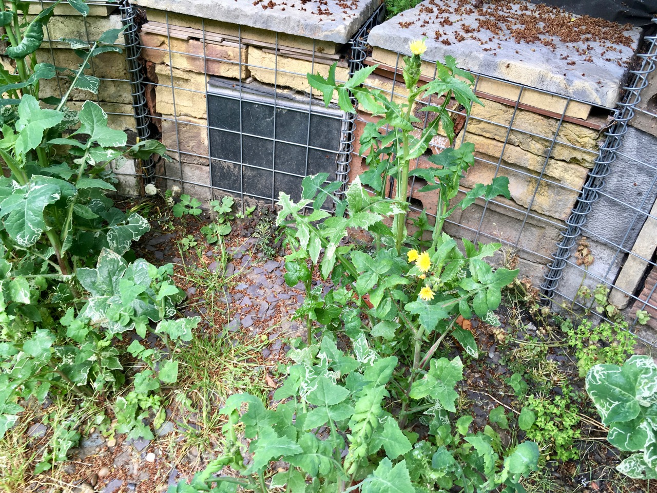 weeds galore